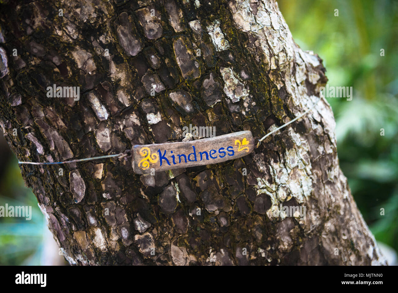 La gentilezza di segno nascosto delicatamente nella foresta come un sublime promemoria. Fatte a mano, che si trova in Costa Rica. Belle esperienze di viaggio possono essere trovati nei dettagli. Immagini Stock