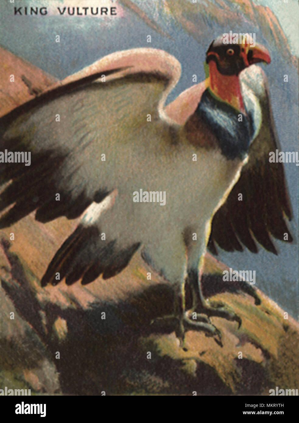 avvoltoio datazione Hook up ATV Winch