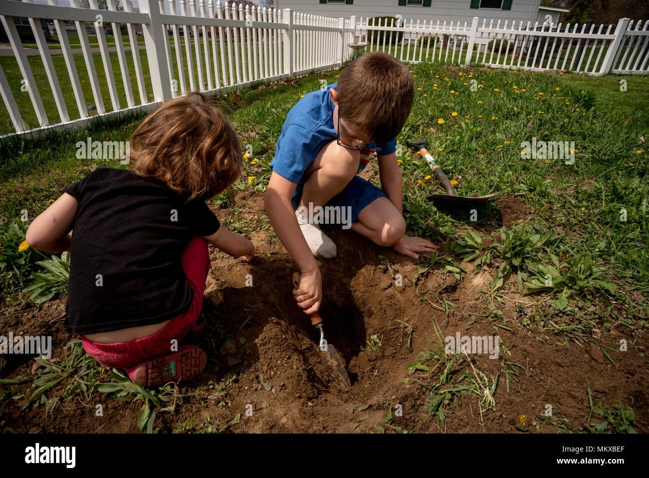 Due bambini di scavare nella sporcizia in un giardino. Immagini Stock