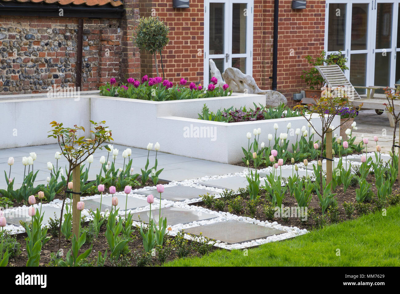 """Standard di mezza Rosa """"Stella Polare"""" e Tulipa """"diamante rosa' linea l'ingresso alla contemporanea area patio. Credits: Design by Zinnia Garden Design. Const Foto Stock"""