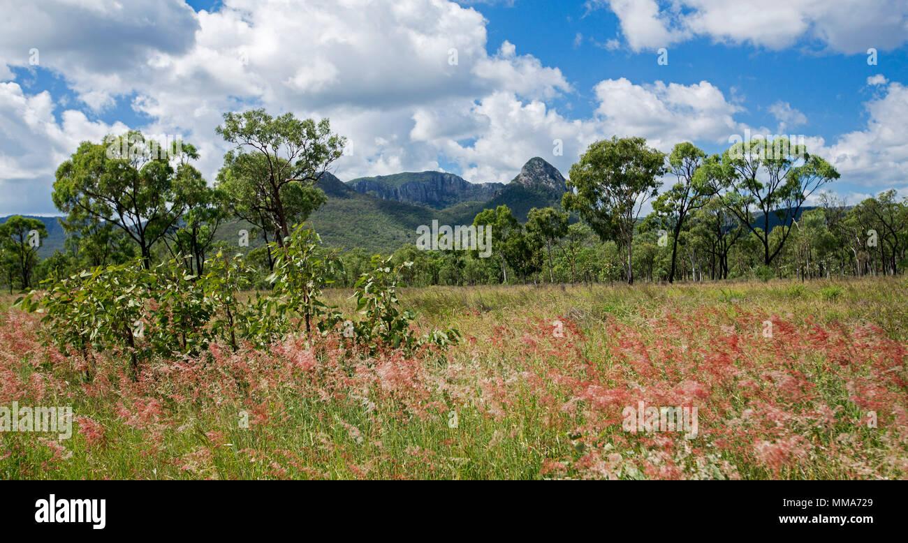 Colorato paesaggio panoramico, fiori di colore rosso del golden erbe, i boschi e i picchi di Gran Catena Divisoria sotto il cielo blu a Homevale Parco Nat Australia Immagini Stock