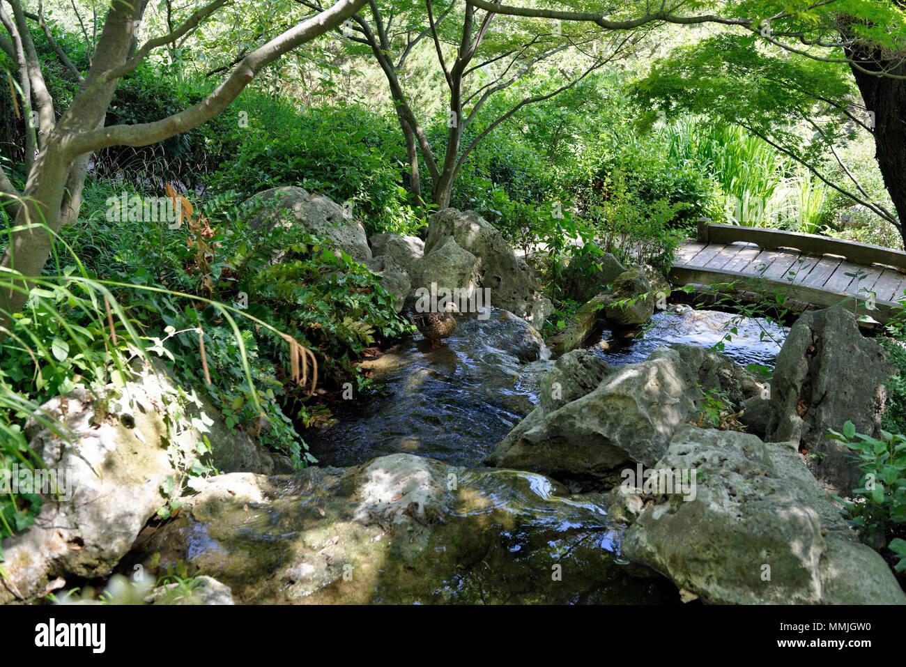 Un anatra sorge in uno stagno del giardino giapponese orto