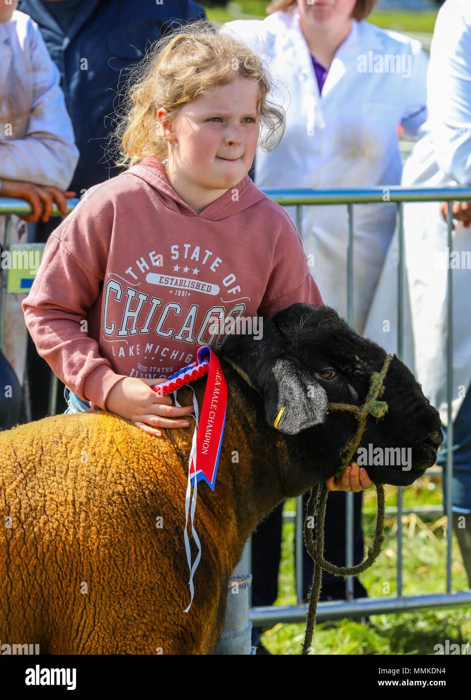 """Ayrshire, Regno Unito. Il 12 maggio 2018. In una calda e soleggiata giornata di maggio, annuale di contea di Ayr Show tenutosi a Ayr Race Course ha attratto centinaia di partecipanti ai concorsi di allevamento e anche migliaia di spettatori. Così come i soliti concorsi per bovini, ovini e pollame, non ci sono premi in palio per i vincitori del maschio e femmina """" i giovani agricoltori rimorchiatore di guerra """" la concorrenza e per il miglior decorate autocarro Credito: Findlay/Alamy Live News Foto Stock"""