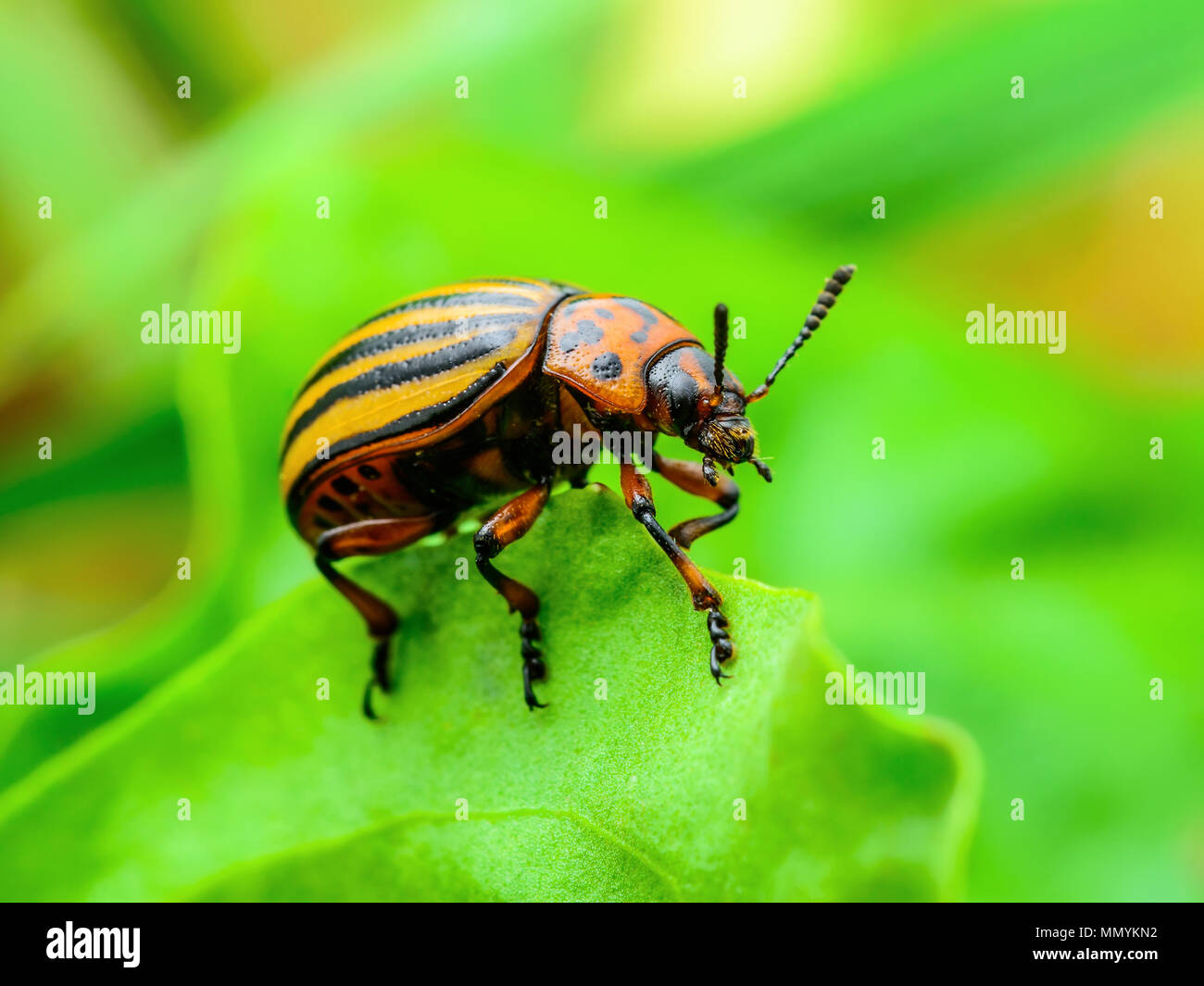 Plant protection immagini & plant protection fotos stock alamy