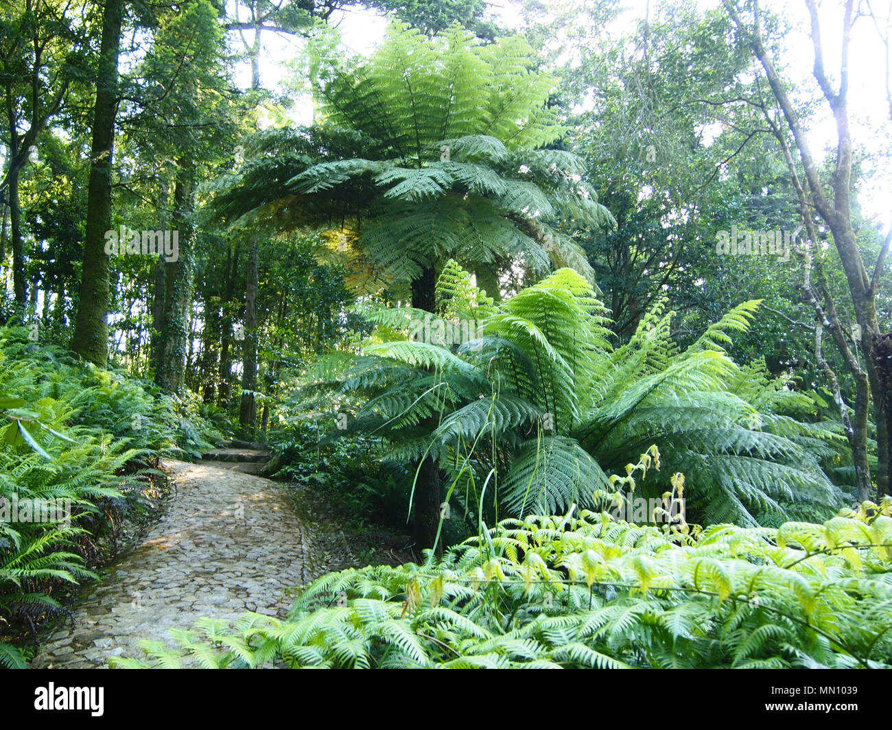 felci arborescenti e altre piante tropicali nel parque da
