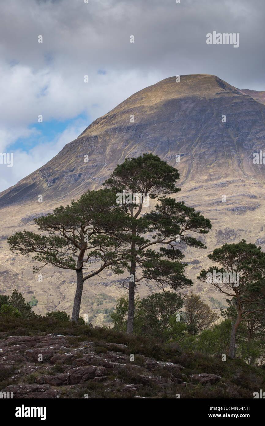 Caledonian pini sopra Loch Torridon, Ben Damh station wagon, Wester Ross, Scotland, Regno Unito Immagini Stock