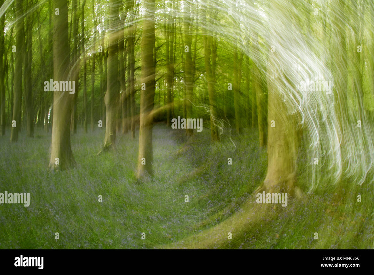Luce di vorticazione percorsi su una scena di bosco Foto Stock