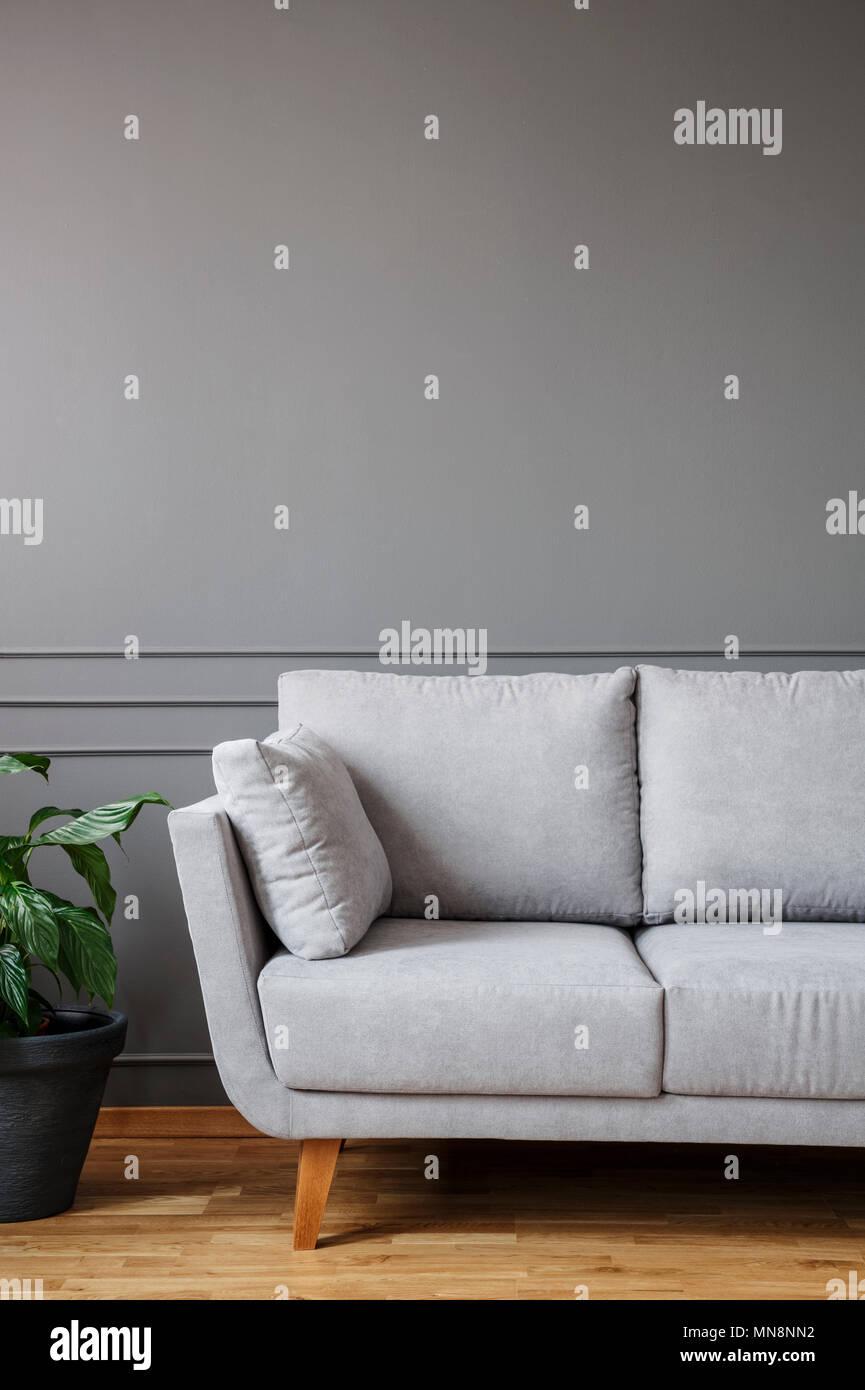 Soggiorno Con Divano Grigio Scuro semplice soggiorno interno con pianta in vaso in piedi