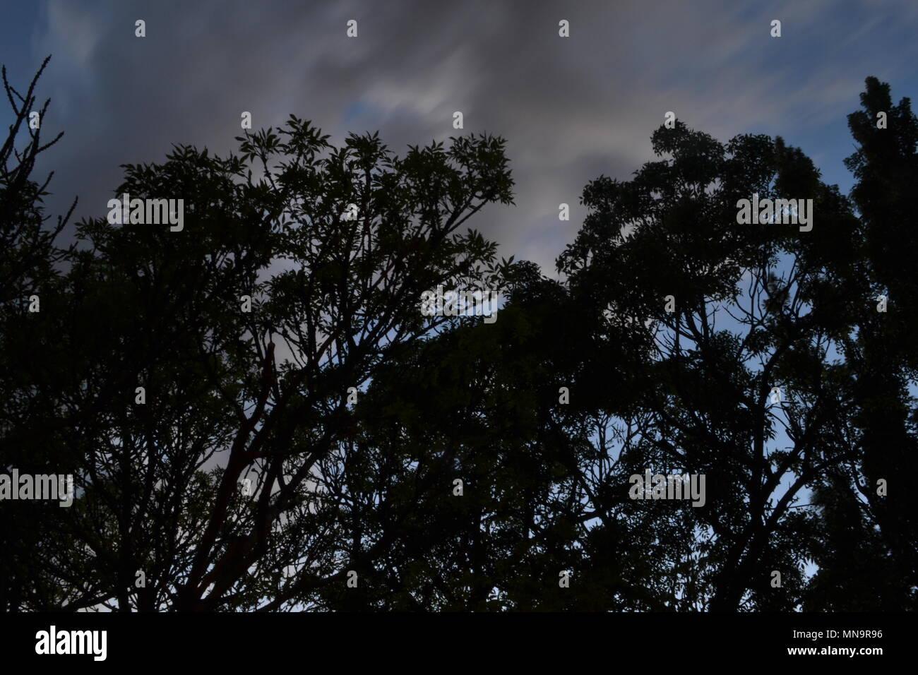 Sagome di alberi nel crepuscolo wallpaper Immagini Stock