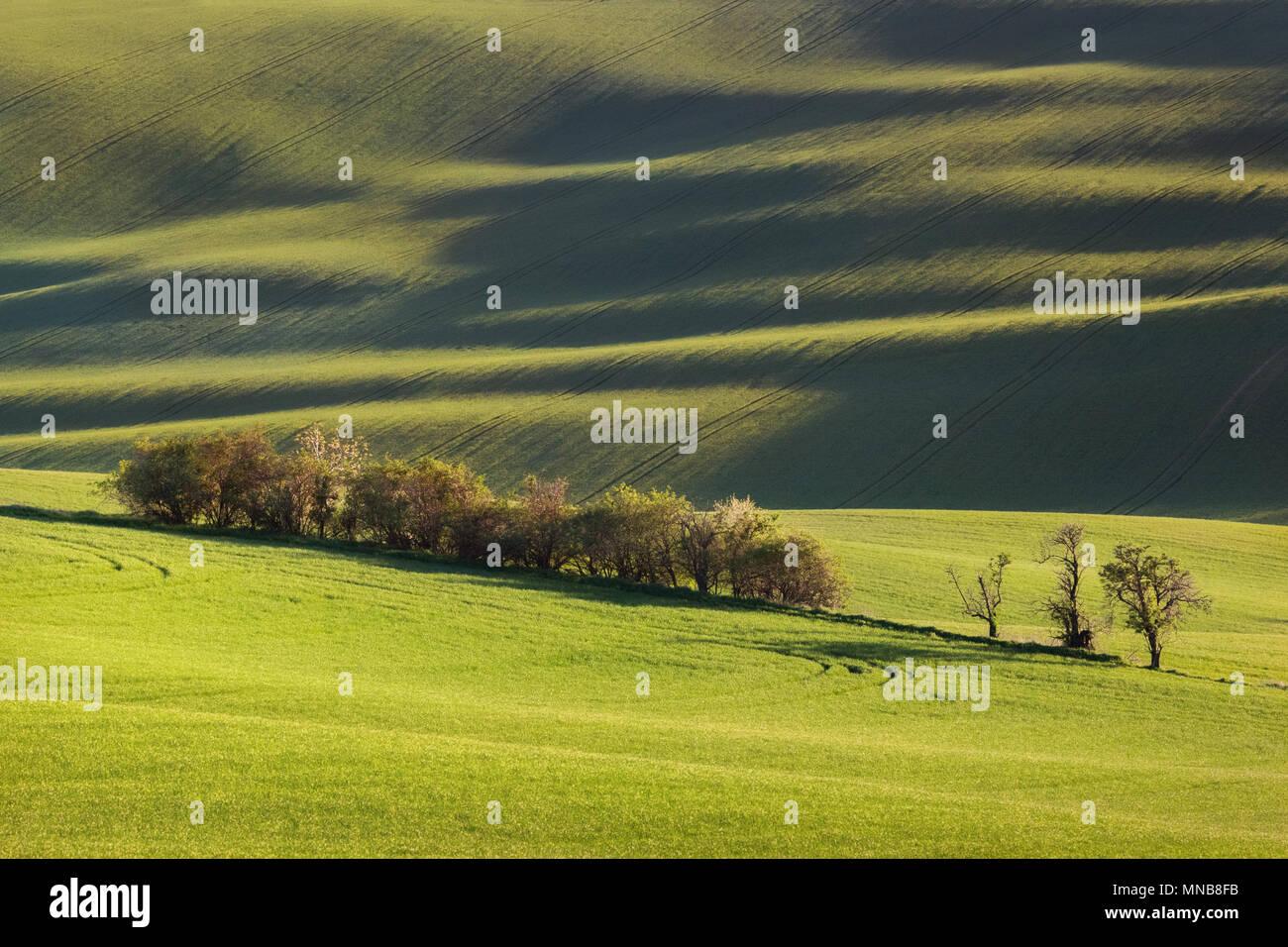 Sunset linee e forme d'onda con alberi in primavera Foto Stock