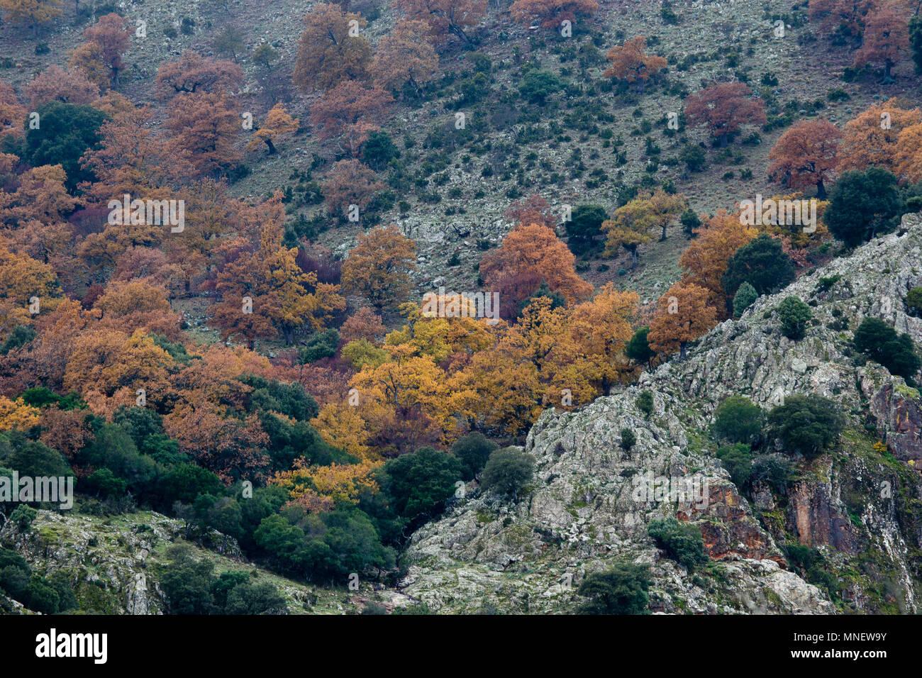 Sardegna; Gennargentu; Inverno; Parco del Gennargentu; Immagini Stock