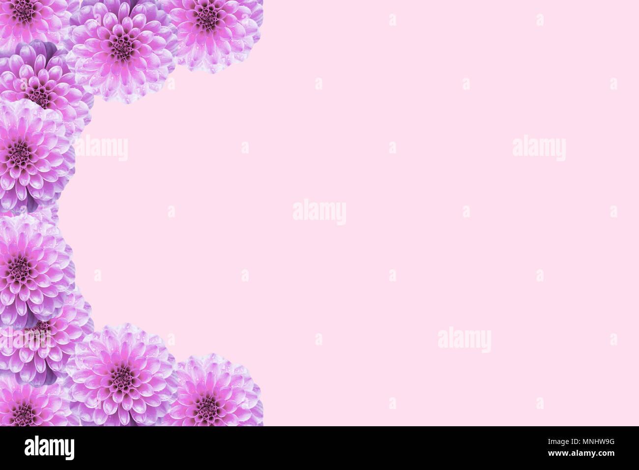 Cartolina Floreale Con Fiori Di Colore Rosa Dalia Collage Dalie