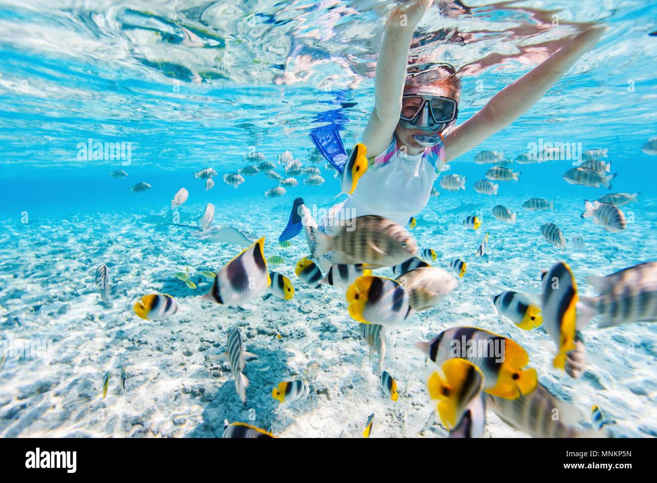 La donna lo snorkeling nelle chiare acque tropicali tra pesci colorati Immagini Stock