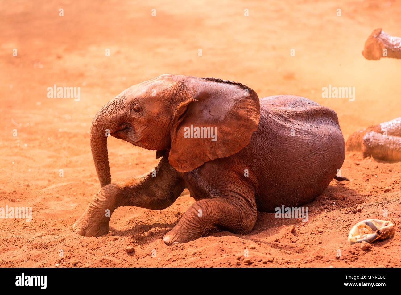 Close up di un elefante nel parco di safari Immagini Stock