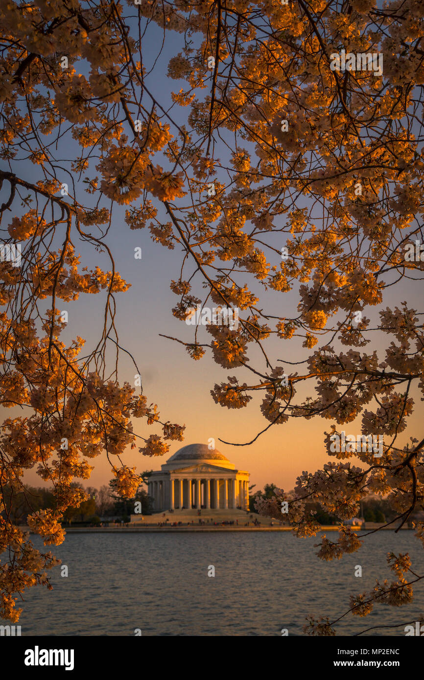 Washington, DC Cherry Blossom Festival Foto Stock