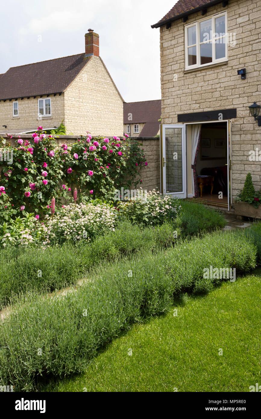 Giardino Di Una Casa frondose rosa rose rampicanti su il muro del giardino di una