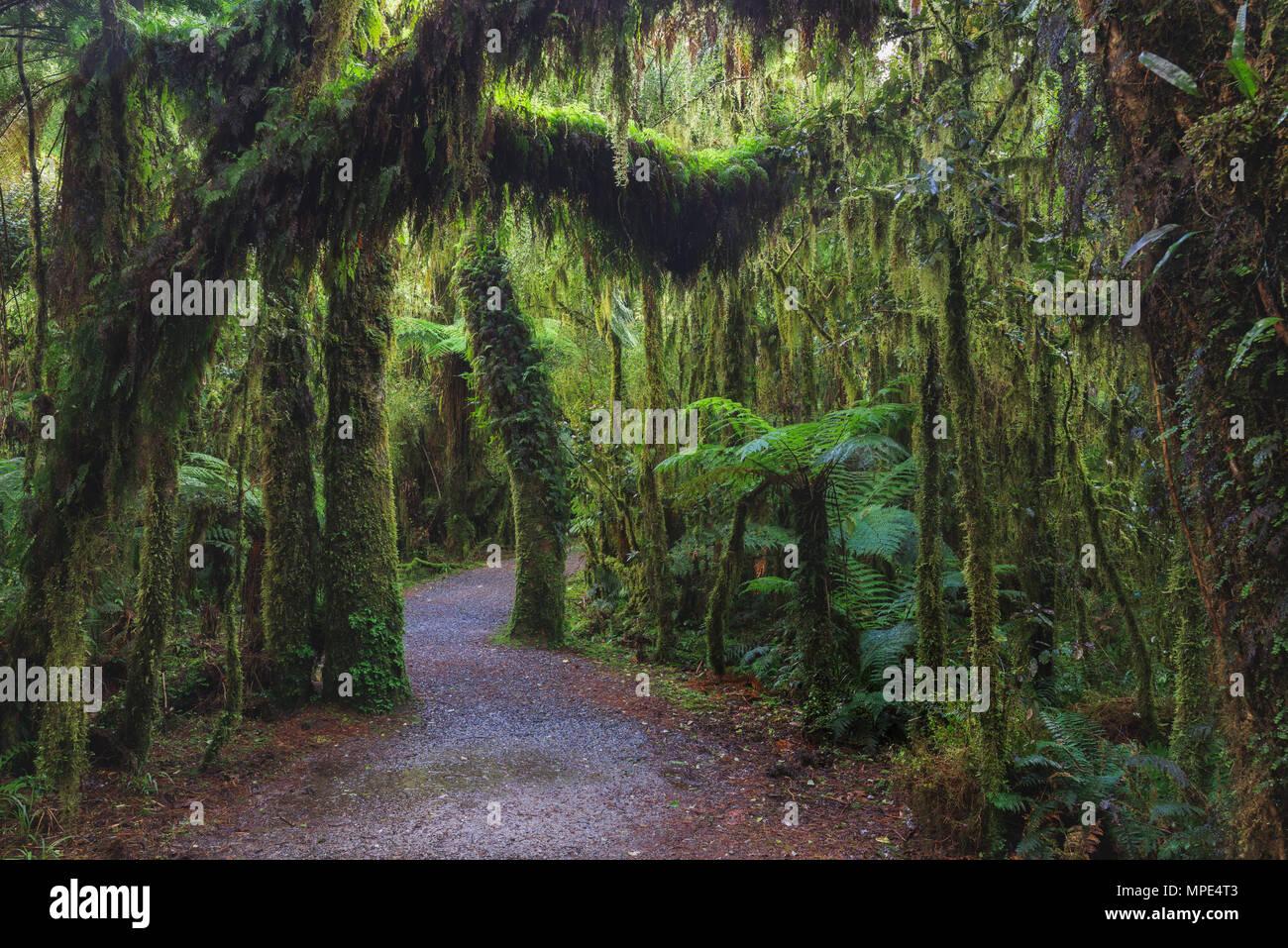 Nuova Zelanda Foresta pluviale paesaggio Dettagli foto Immagini Stock