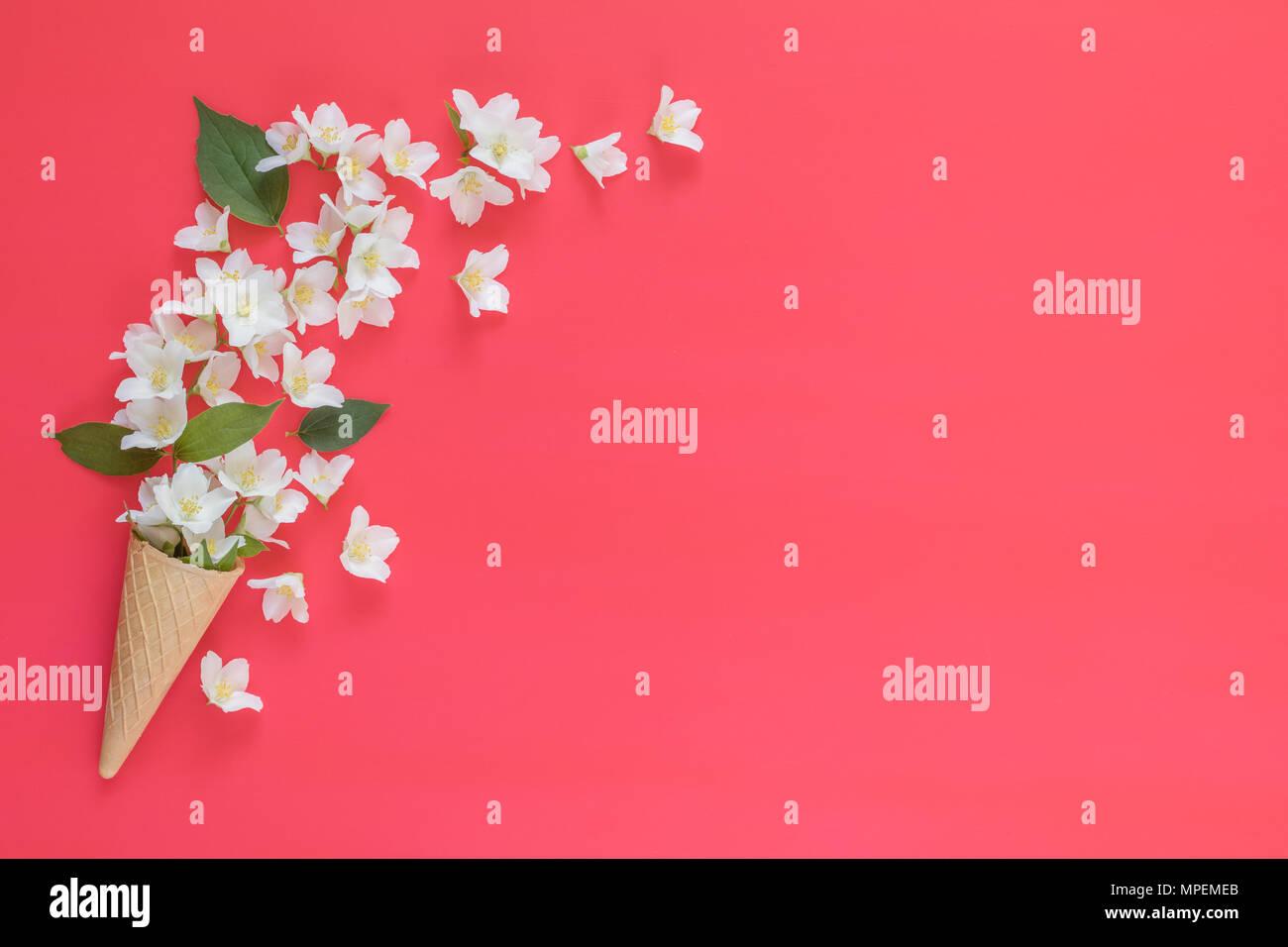 Cono Di Cialda Con Gelsomino Bouquet Di Fiori Su Sfondo Rosa