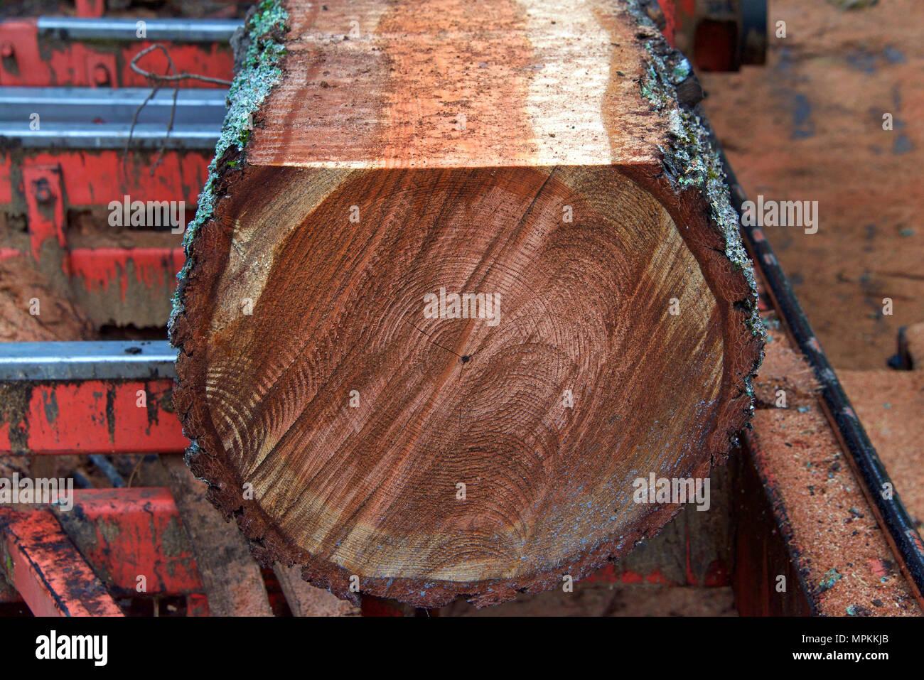 Tronco di albero log sul letto di sega con un lato della corteccia