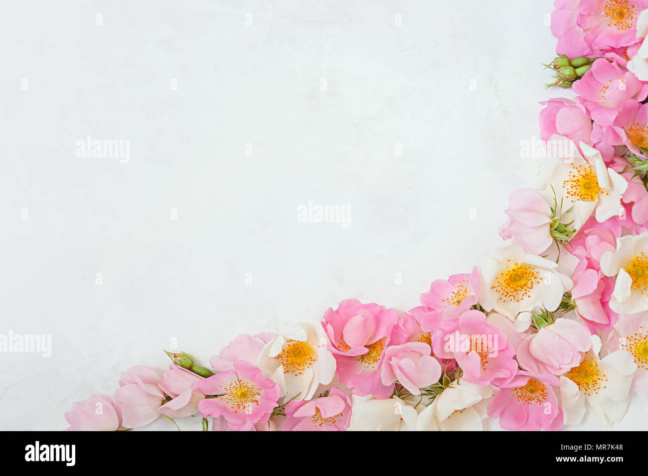 Fiore di telaio di frontiera fatta di rosa bouquet di rose su sfondo bianco. L'appartamento di laici che, vista dall'alto. Texture floreali dello sfondo. Foto Stock