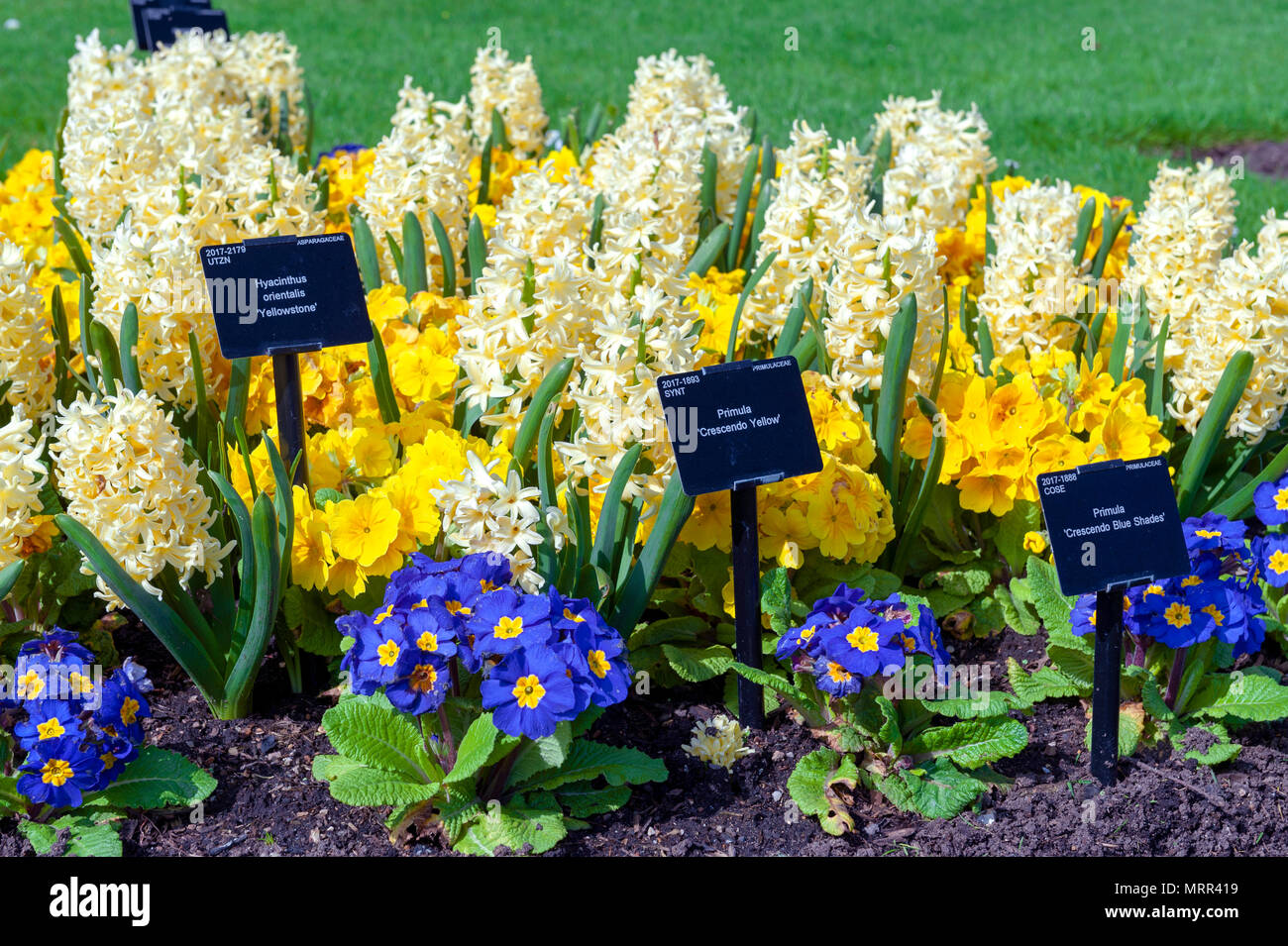 London, Regno Unito - Aprile 2018: un assortimento di fiori colorati e cresciuto in un aiuola a Kew Gardens, un giardino botanico nel sud-ovest di Londra - Inghilterra Immagini Stock