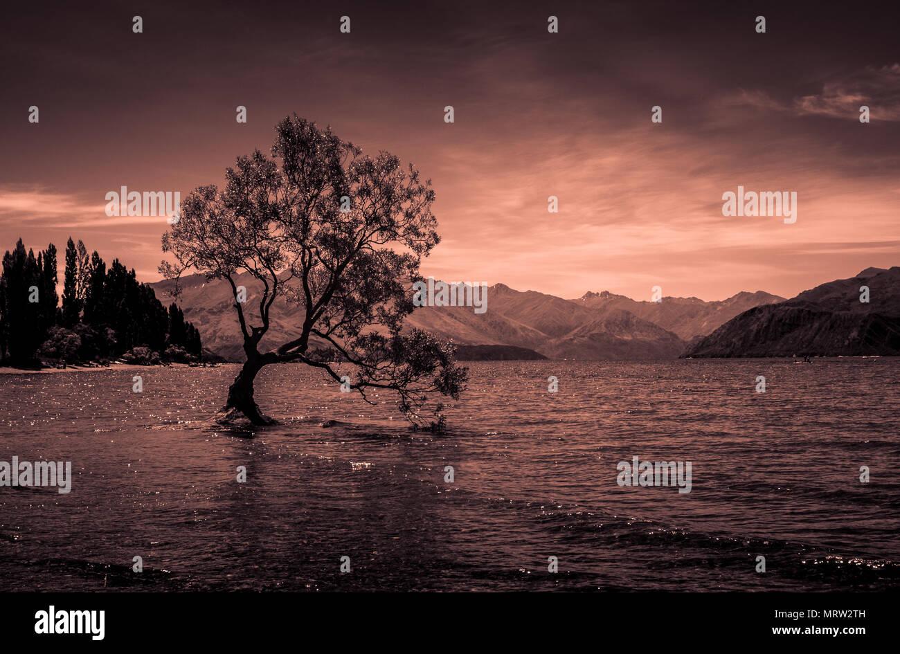 Che arriva a Wanaka tree - famoso lonely albero che cresce nel lago Wanaka nell isola del sud della Nuova Zelanda, montagne sullo sfondo, arancio il tono utilizzato Foto Stock