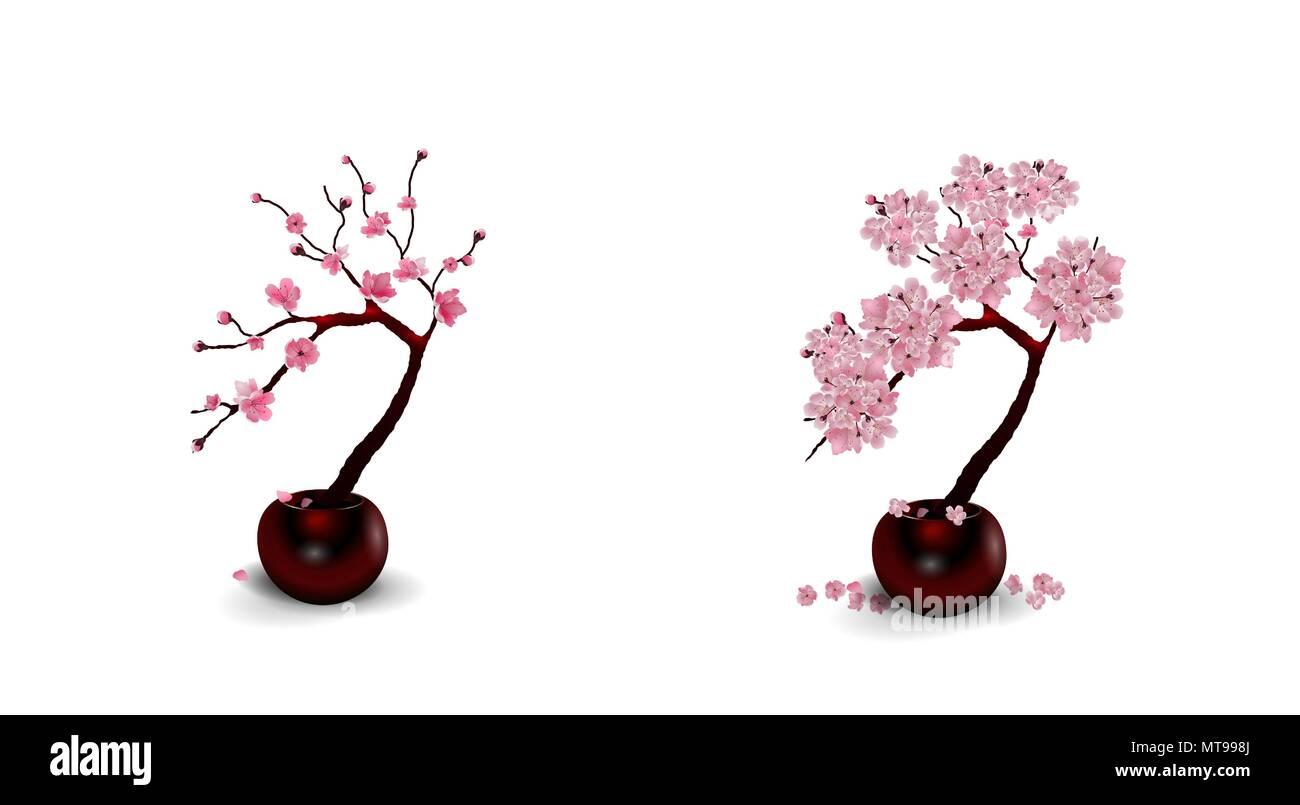 Sakura Ikebana Composizione Due Disegni Di Fiori In Vaso Isolato