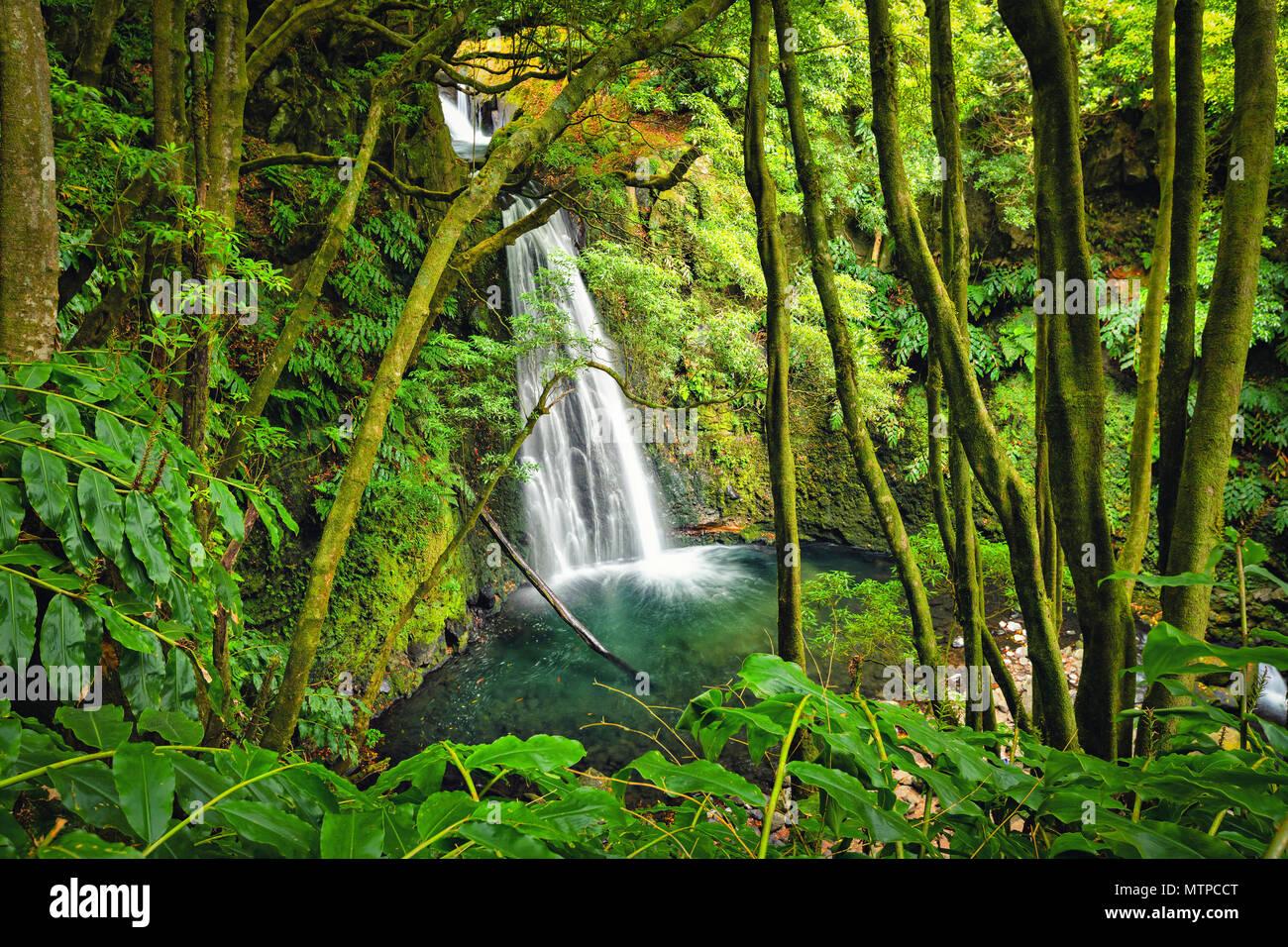 Salto fare Prego cascata perso nella foresta pluviale, isola Sao Miguel, Azzorre, Portogallo Immagini Stock