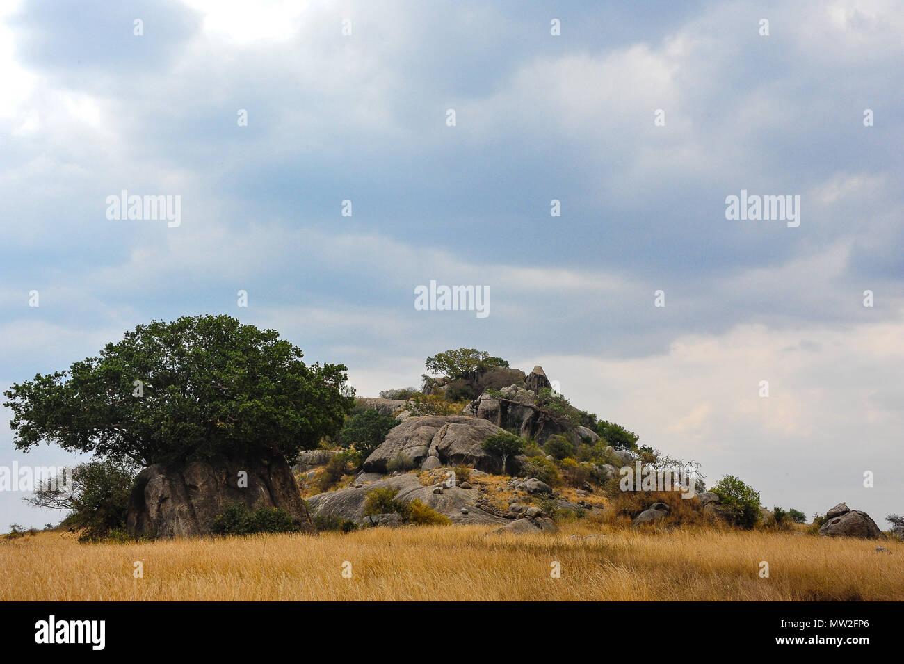 Bellissimo paesaggio del Serengeti. Un kopje roccioso sorge nella prateria dorata con il grigio nuvole temporalesche tettuccio Immagini Stock