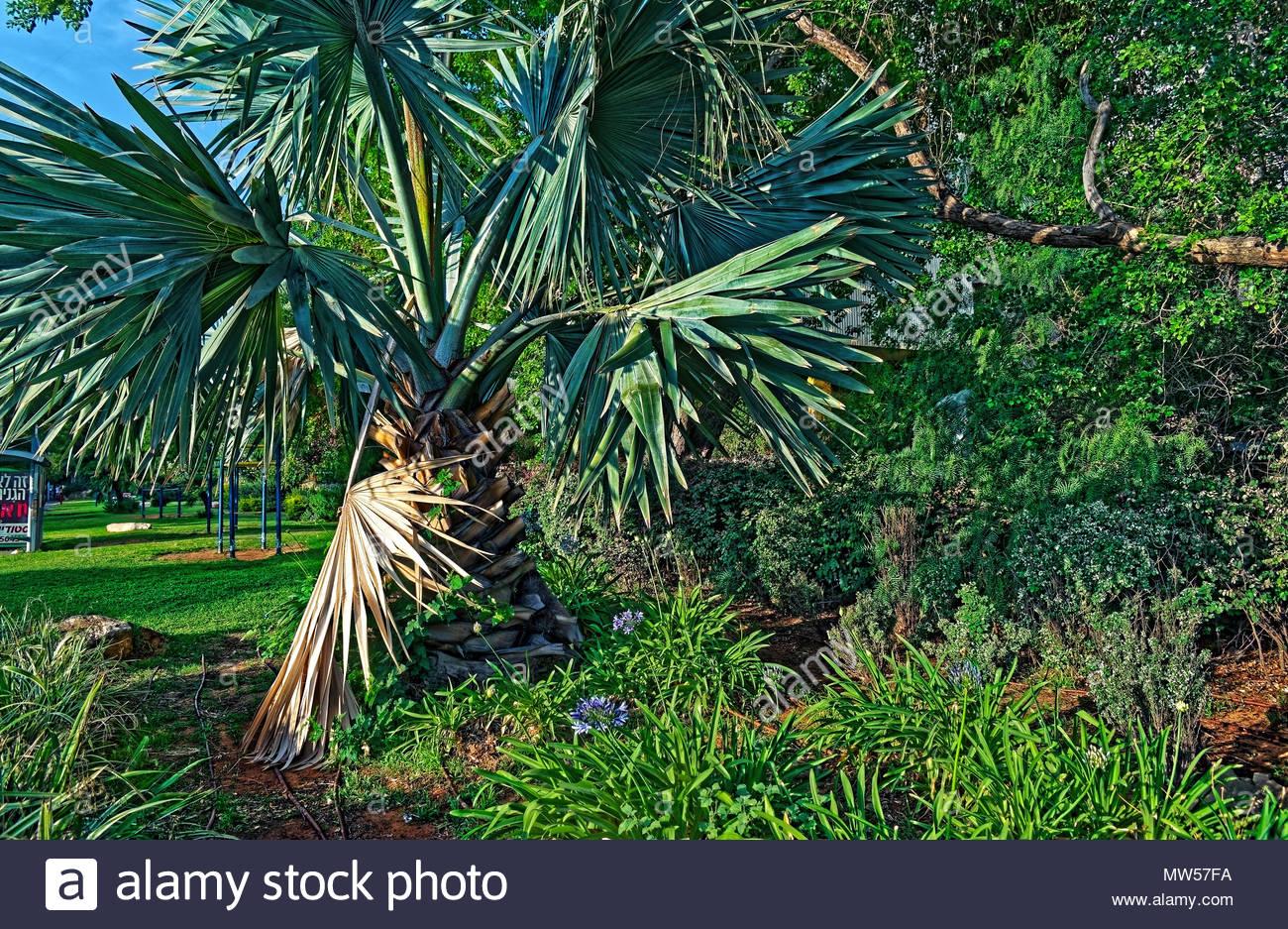 Albero gigante con piante e cespugli al sole può avere una varietà di usi e significati Immagini Stock