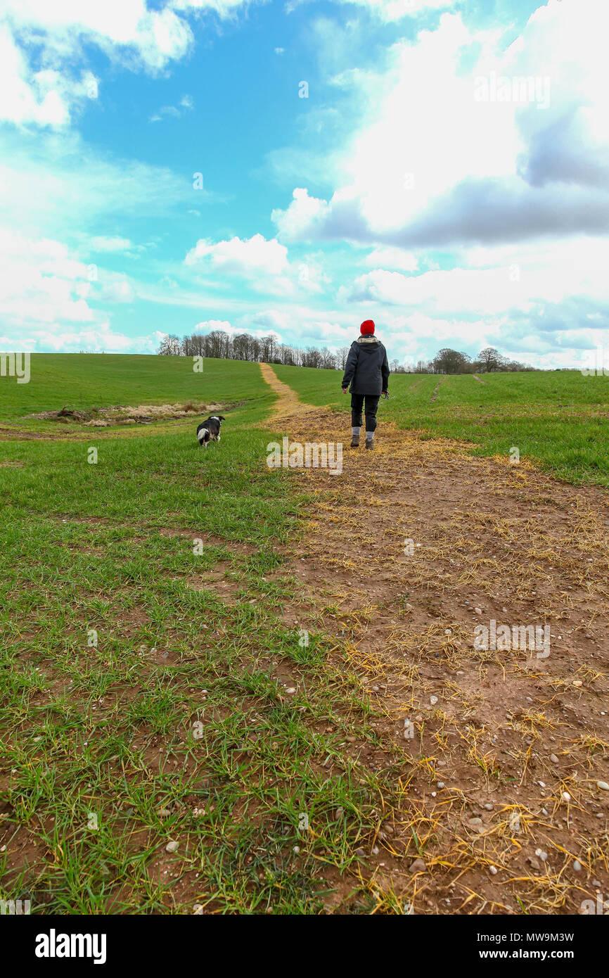 Una donna e il suo cane a piedi attraverso un campo piantato con il mais che è stata spruzzata con alghe killer per effettuare un percorso attraverso il campo Immagini Stock