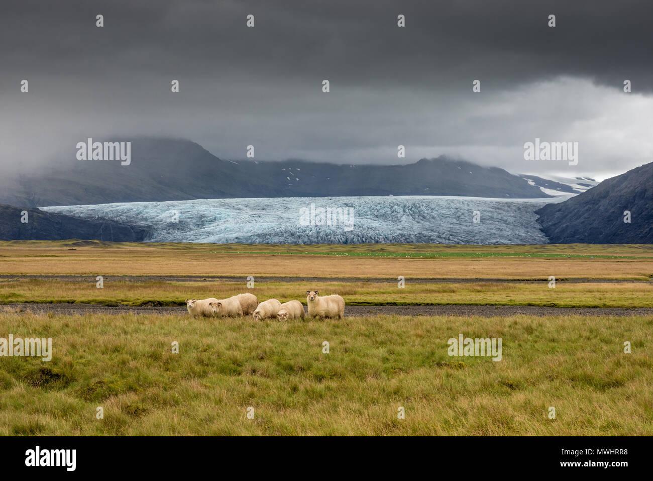 Sulla costa meridionale dell'Islanda Immagini Stock