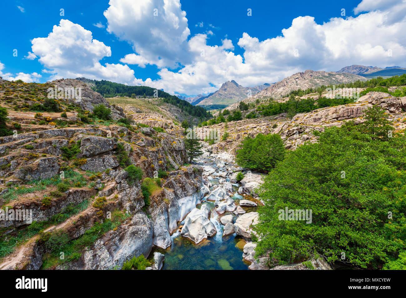Flusso e la gamma della montagna in Corsica, Francia in primavera Immagini Stock