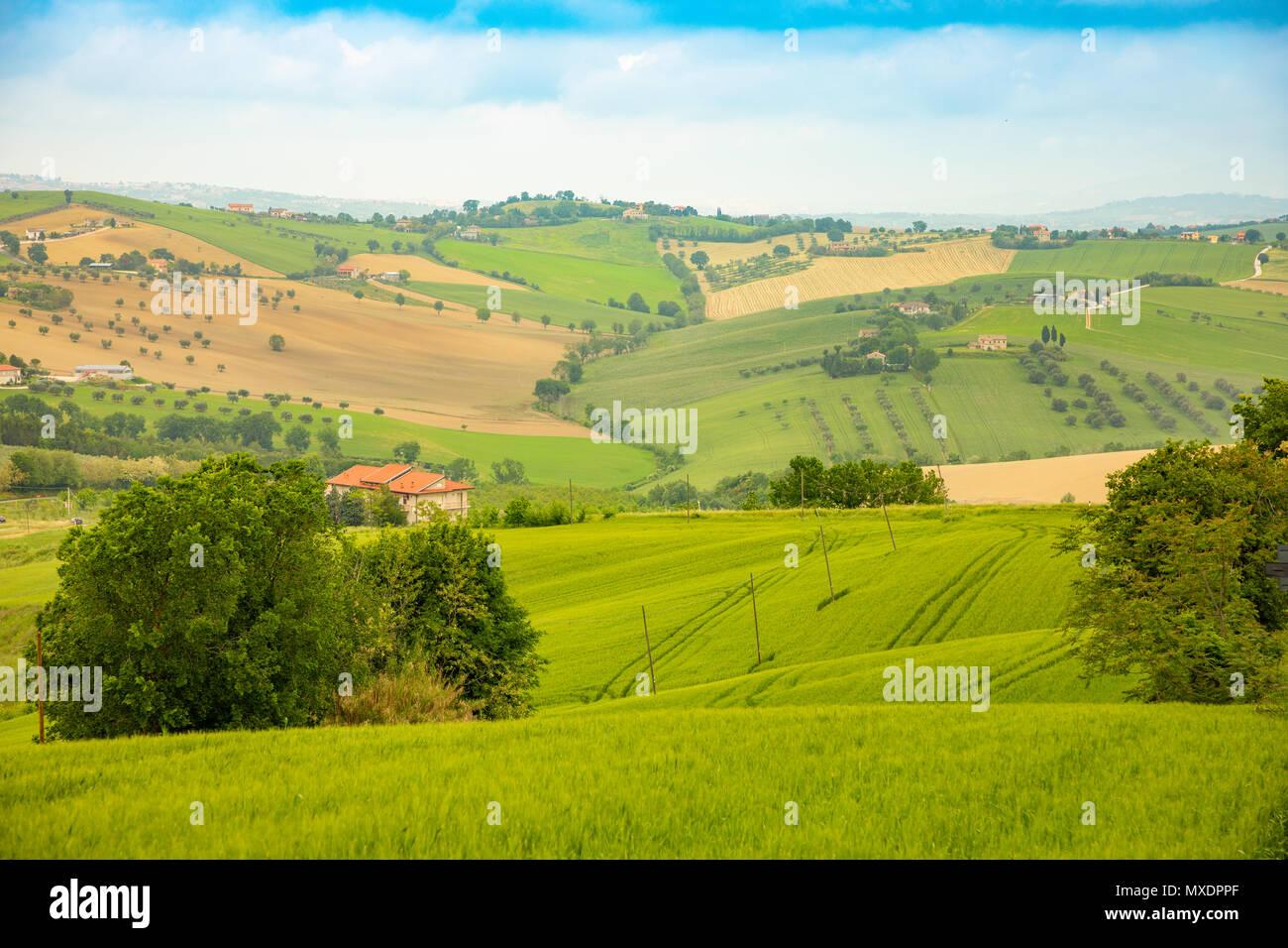 Paesaggio Rurale A Campi Estivi In Provincia Di Ancona In Italia