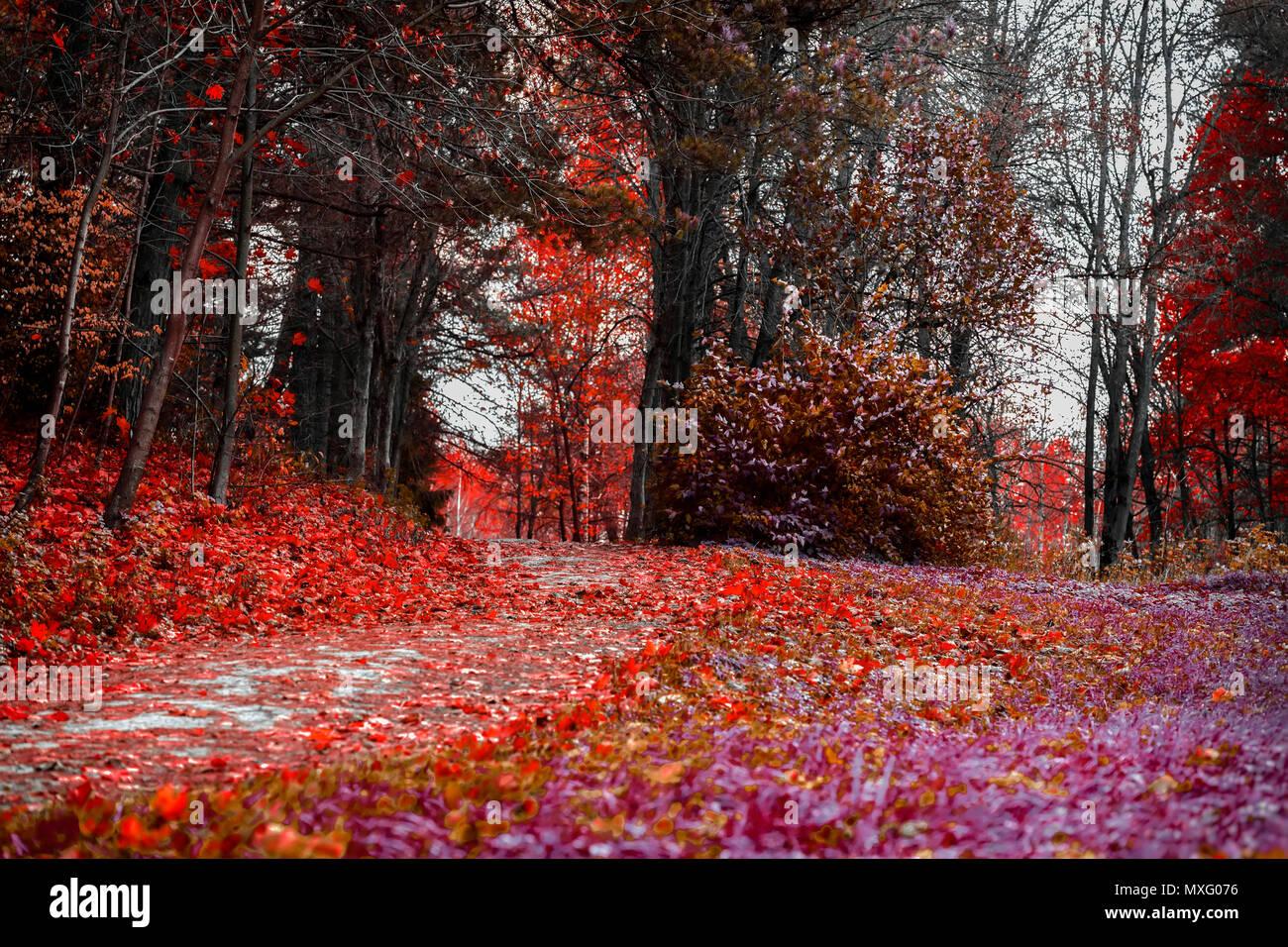 Colori luminosi di caduta. Percorso di foresta con molte foglie cadute, scarlatto paesaggio autunnale nel vecchio parco. Passeggiate, umore, nostalgia concept Immagini Stock