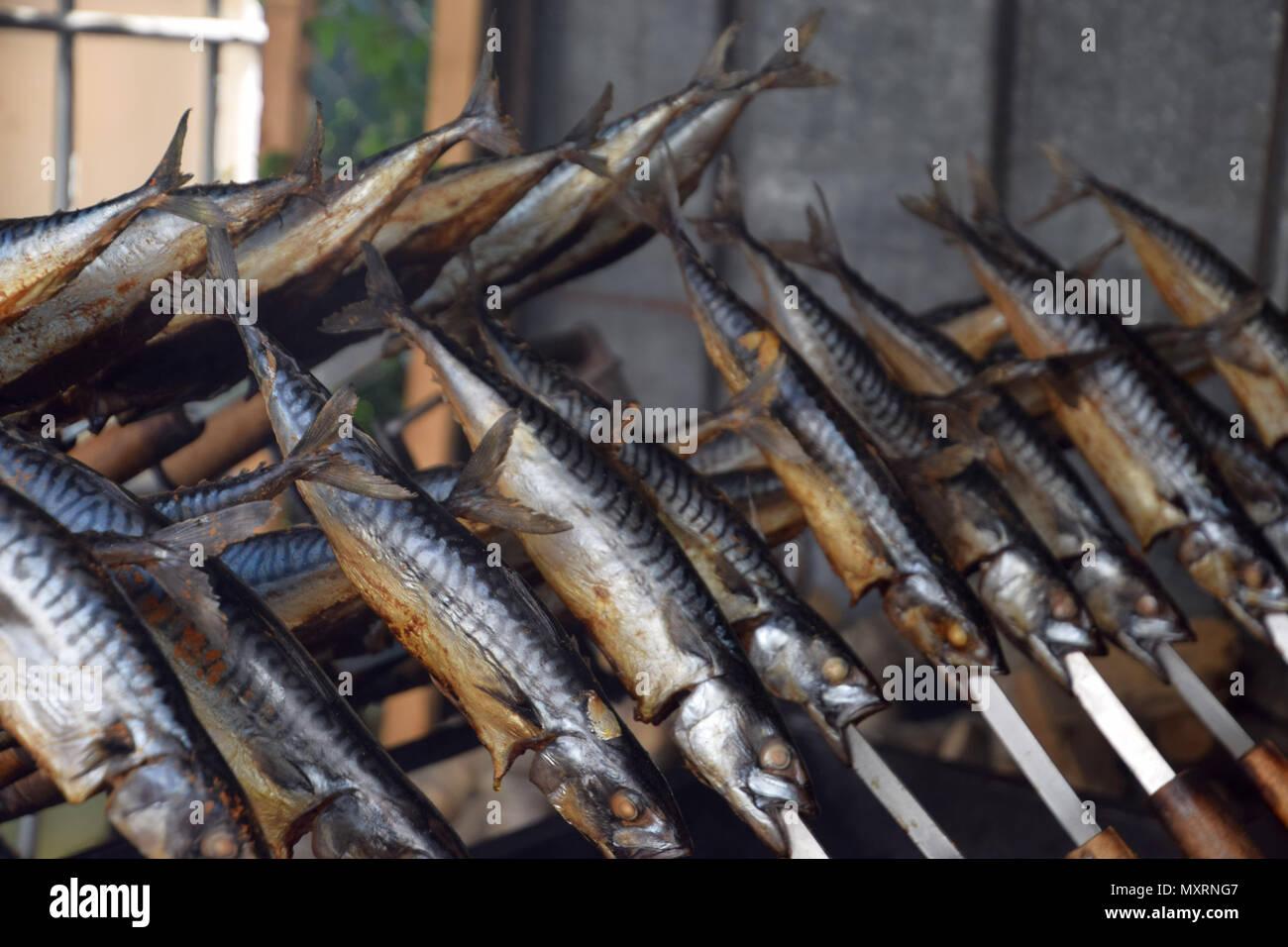 Scomber scombrus grigliata per cena al di fuori Immagini Stock