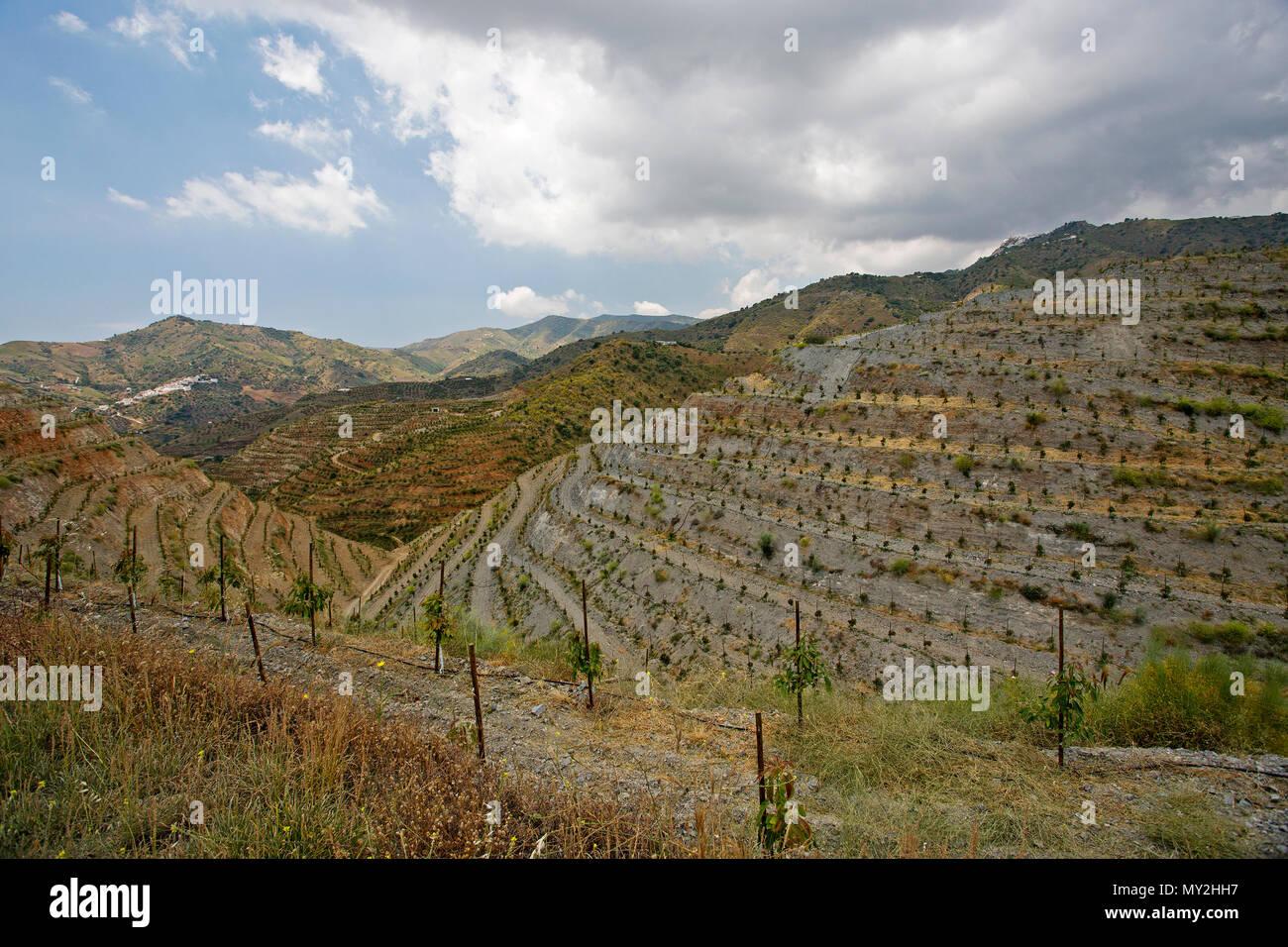I terrazzamenti su una collina di fattoria in Andalicia, Costa del ...