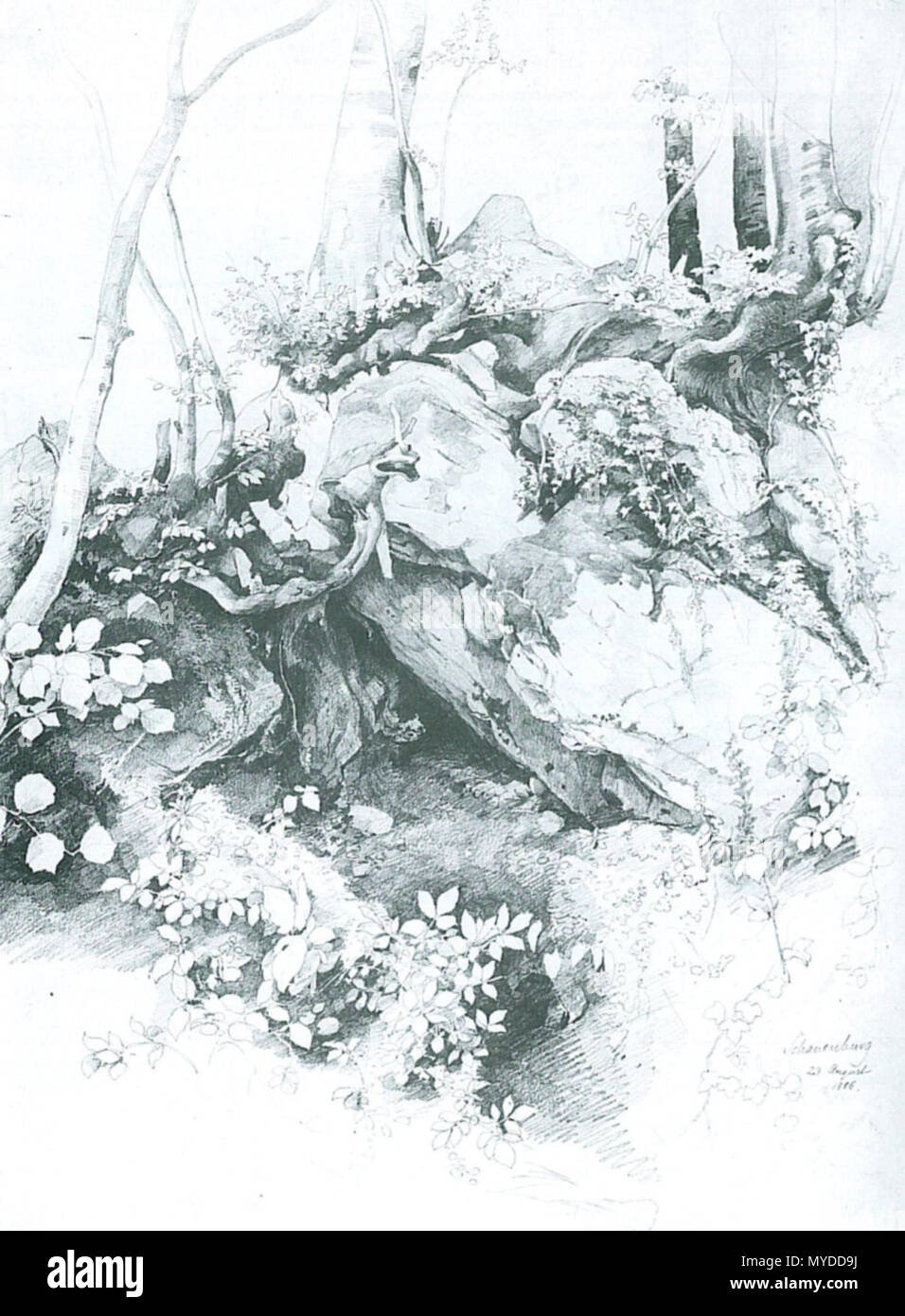 . Deutsch: Edmund Kanoldt: Vordergrundstudie, Schauenburg. 50,5 × 35,9 cm. Bleistift auf Papier. La Kunsthalle di Mannheim . circa 1886. Edmund Kanoldt (1845-1904) 153 Edmund Kanoldt Vordergrundstudie Schauenburg Immagini Stock