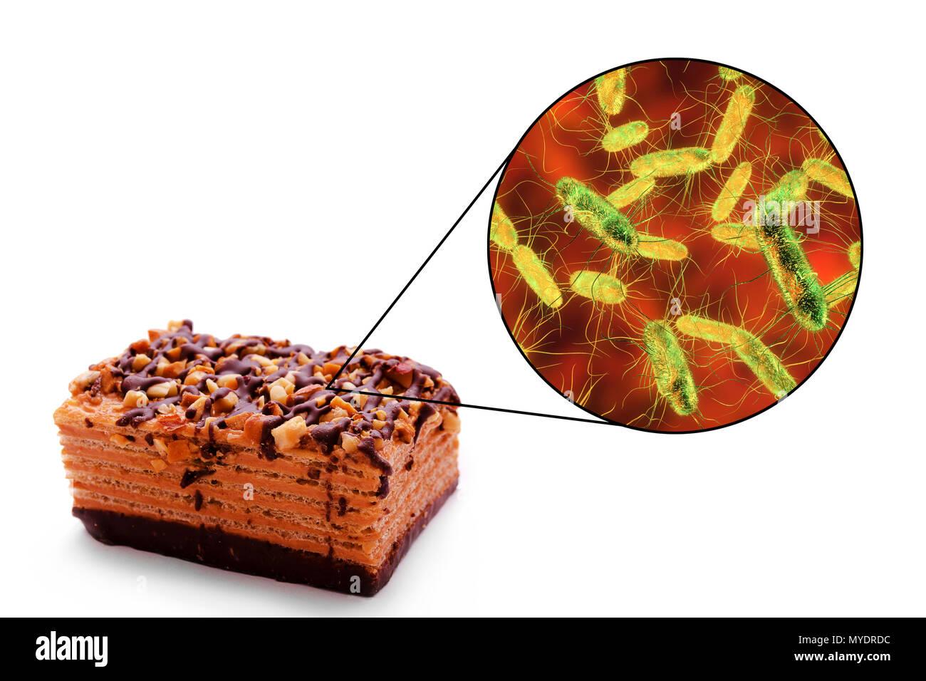 Tossinfezioni Alimentari Causate Da Batteri Della Salmonella