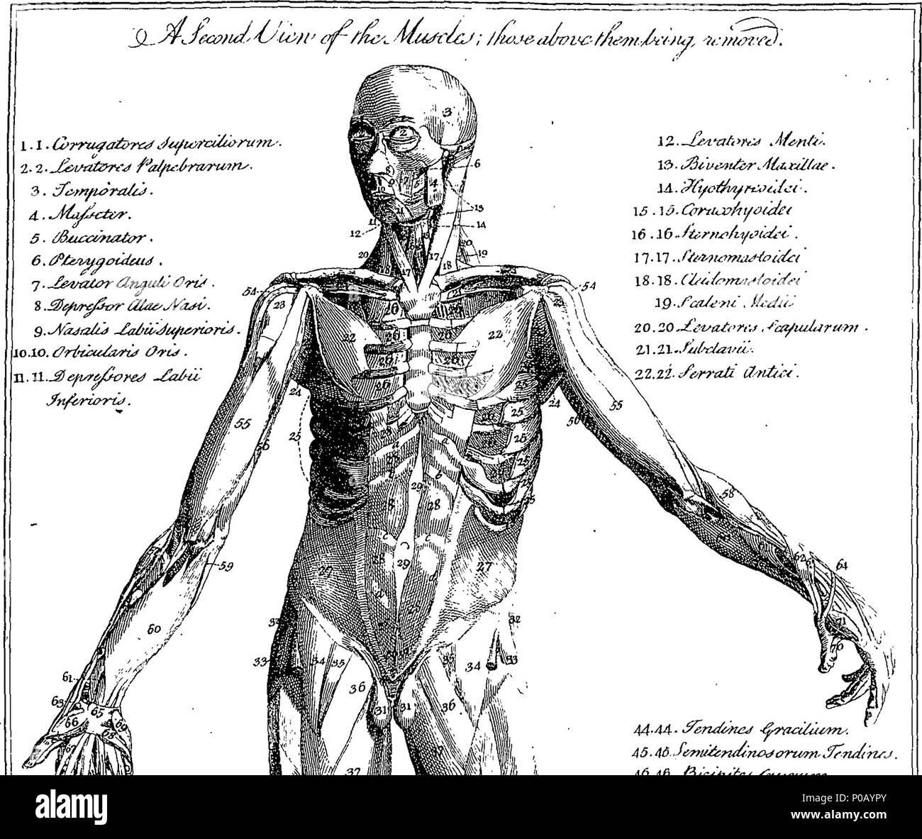 Excelente Bloque Grifo Anatomía Patrón - Imágenes de Anatomía Humana ...