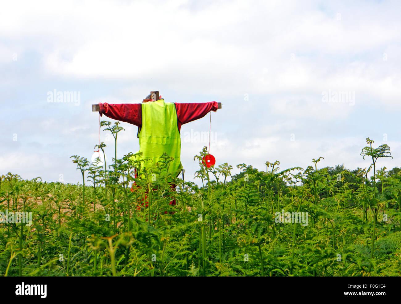 Uno spaventapasseri in corrispondenza di un bordo di campo da un seminativo su una farm di Norfolk a Salhouse, Norfolk, Inghilterra, Regno Unito, Europa. Immagini Stock