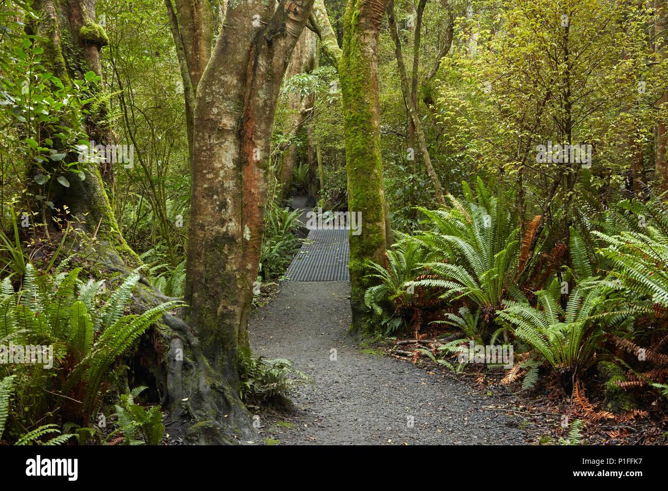 Via a piedi attraverso Seaward Riserva di Bush, Invercargill, Southland, Isola del Sud, Nuova Zelanda Immagini Stock