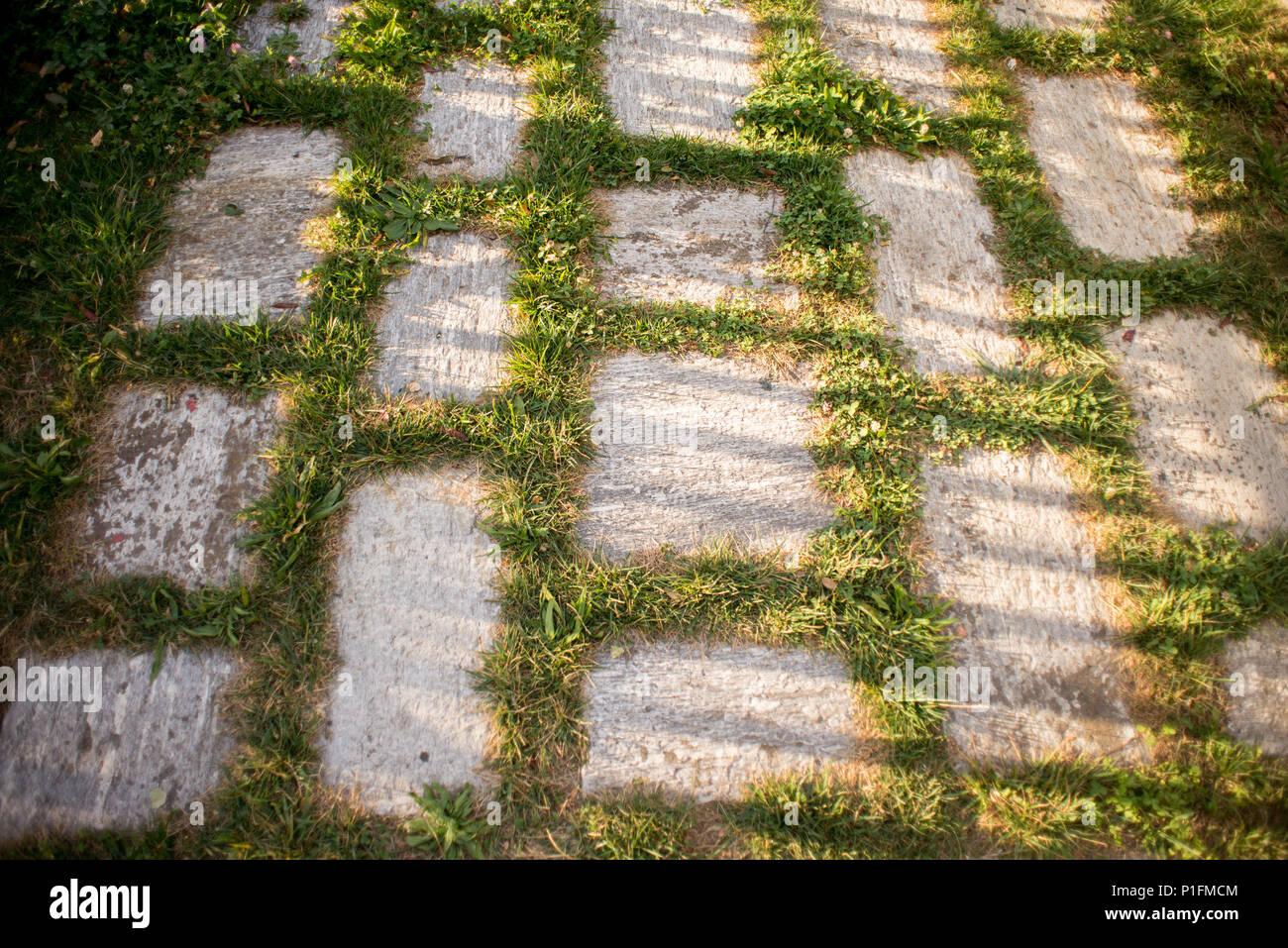 Erba verde tra il granito street piastrella con ombra sul tramonto