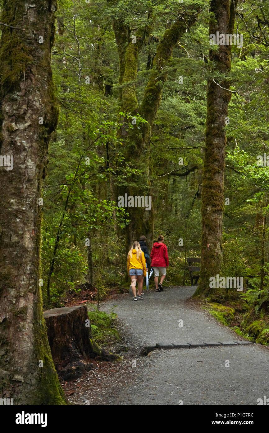 Via A Blu Piscine, montare gli aspiranti National Park, Haast Pass, vicino Makarora, Otago, Isola del Sud, Nuova Zelanda (modello rilasciato) Immagini Stock