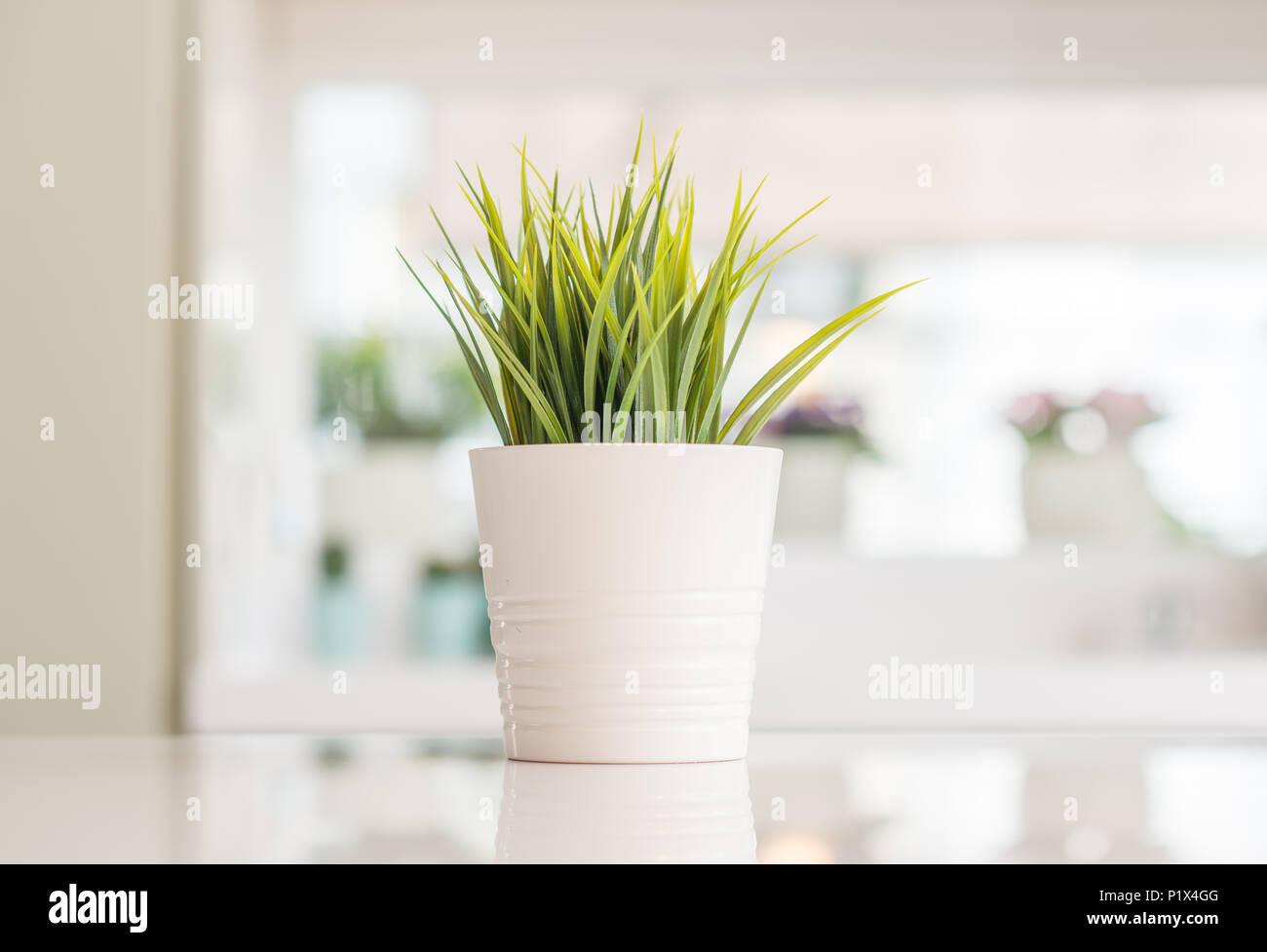Bellissima pianta ornamentale sul tavolo da cucina con sole sfondo ...