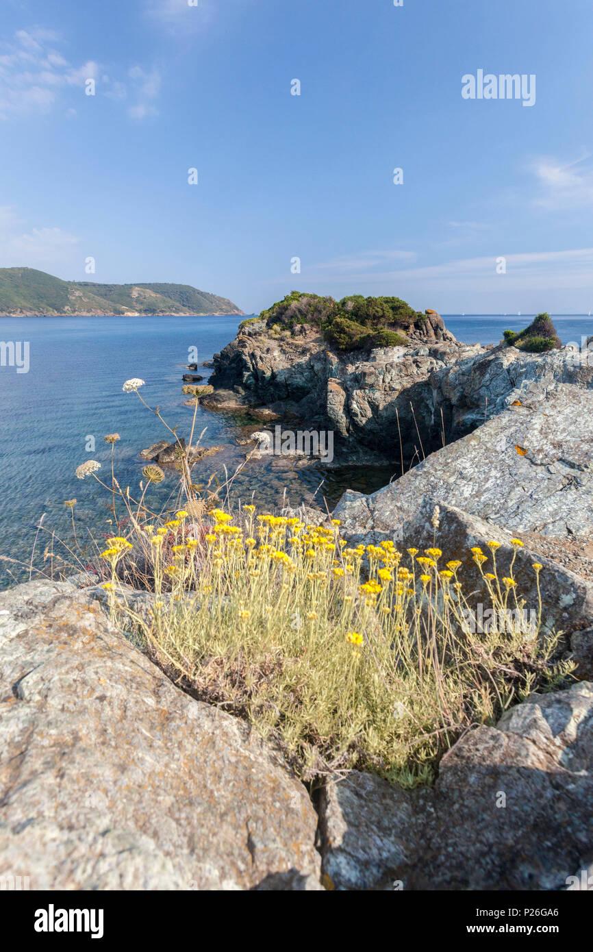 Fiori Gialli Isola Delba.Giallo Fiori Selvatici Lacona Capoliveri Isola D Elba