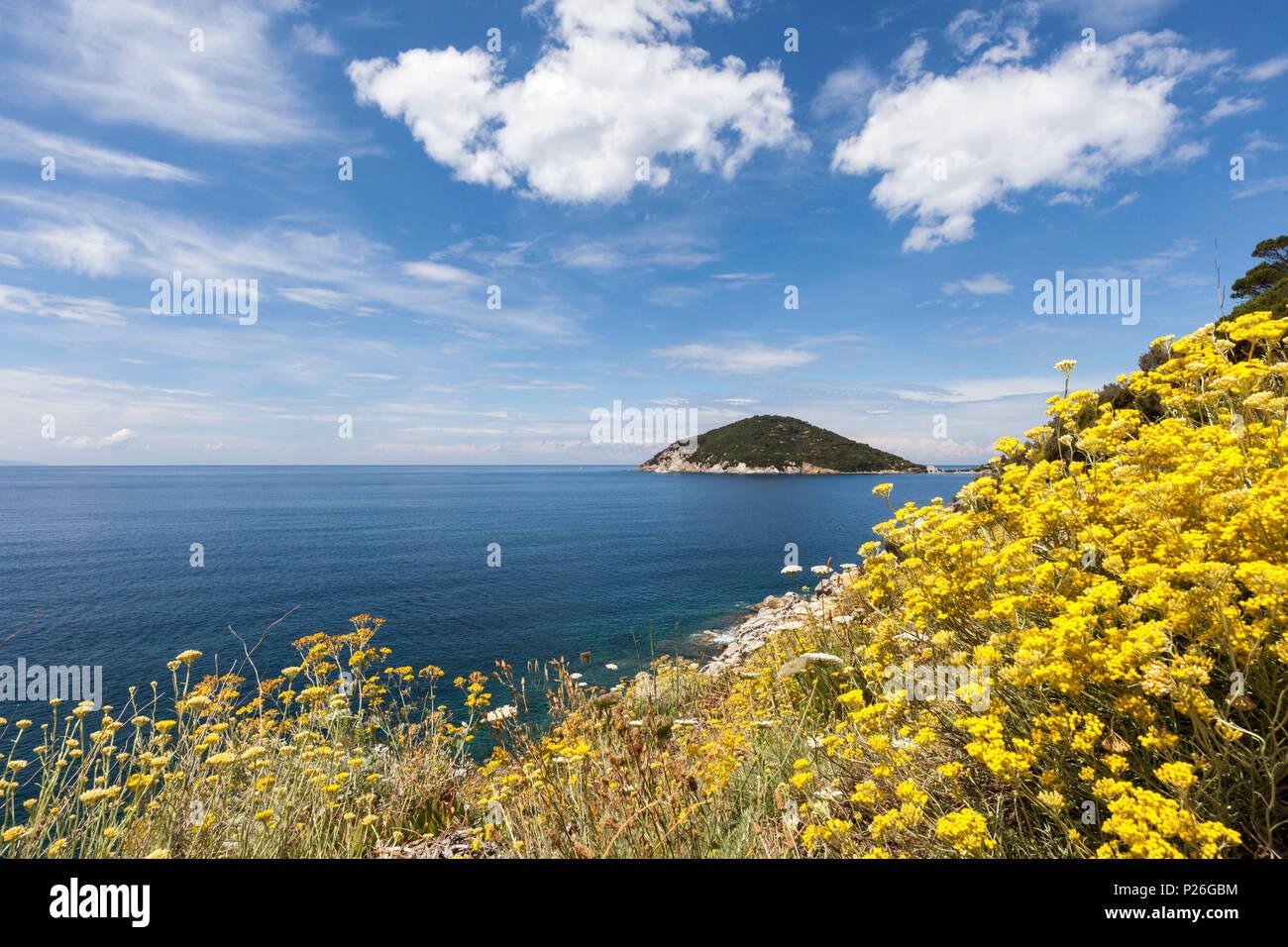 Fiori Gialli Isola Delba.Giallo Fiori Selvatici Golfo Di Procchio Marciana Isola D Elba