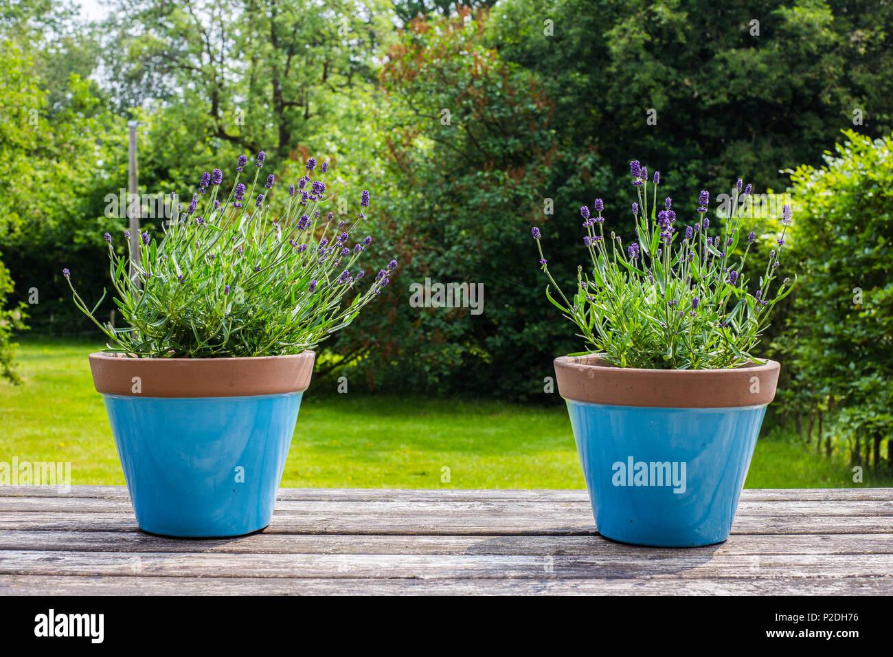 Vasi Da Giardino Colorati due blu colorati vasi di fiori su un tavolo da giardino in