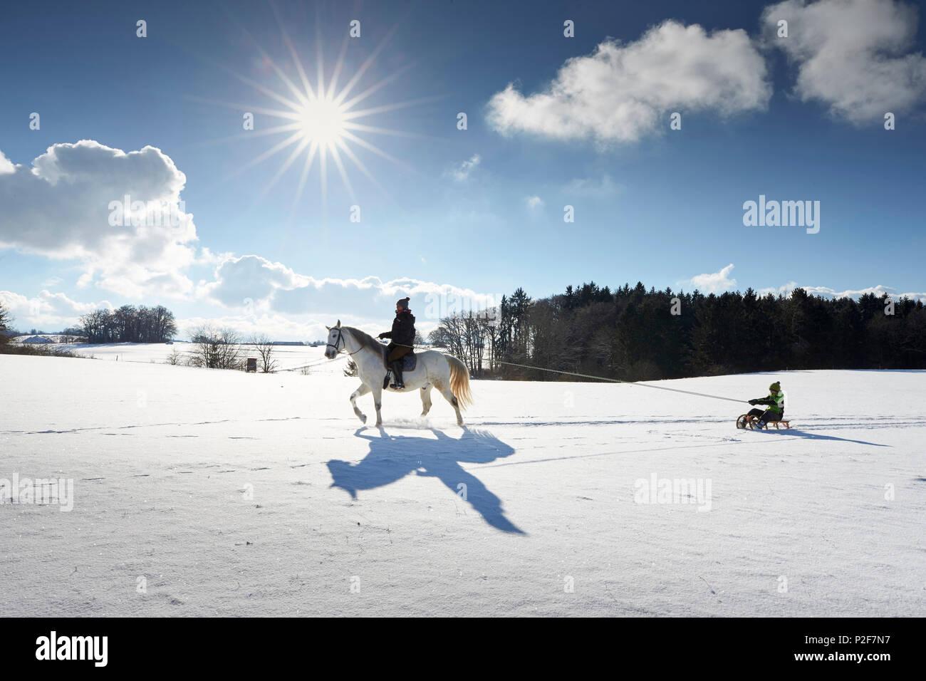 Madre sul cavallo tirando i bambini sulla slitta, Buchensee, Muensing, Baviera Germania Immagini Stock