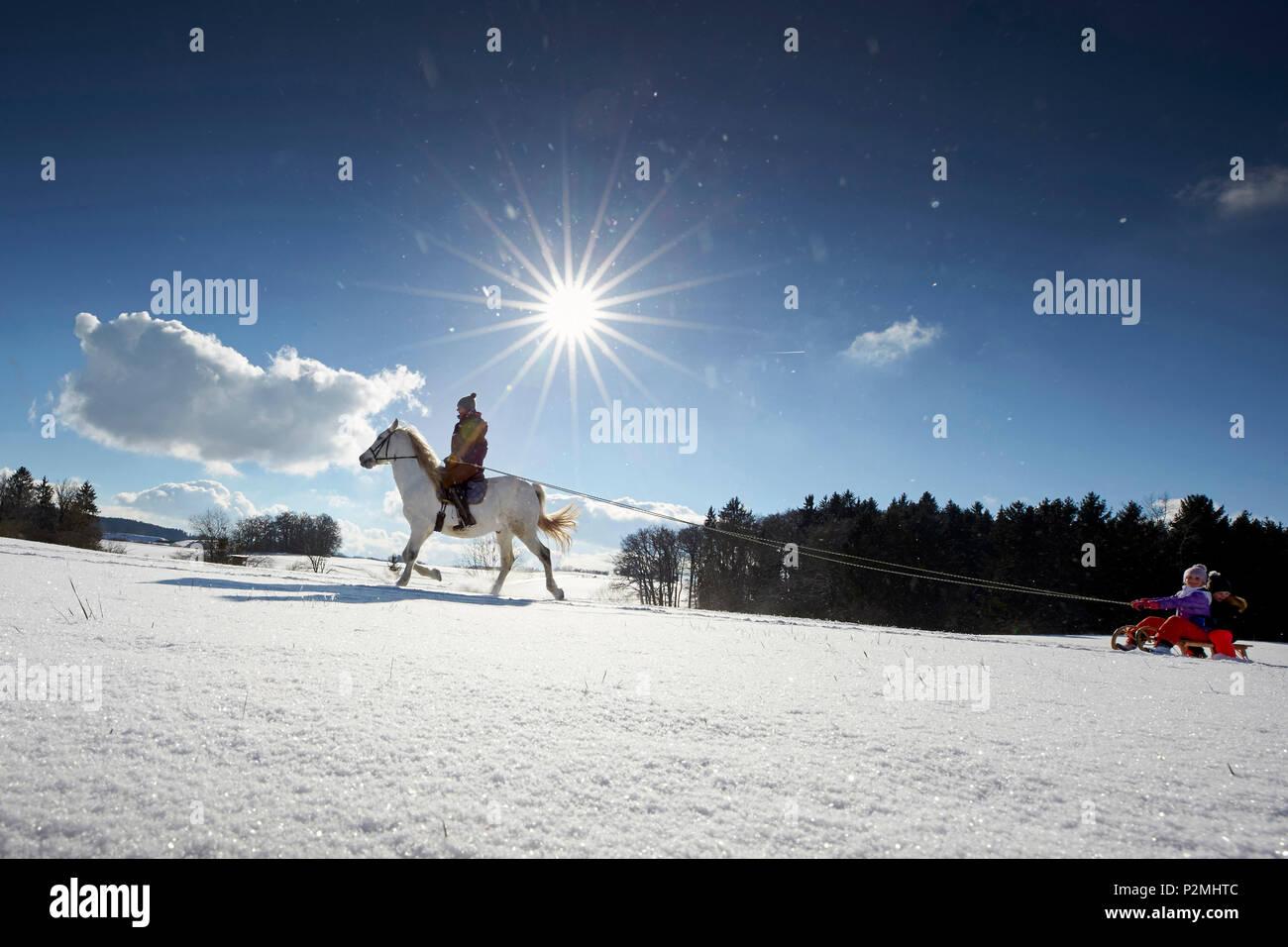 Madre sul cavallo tirando i bambini su una slitta, Buchensee, Muensing, Baviera Germania Immagini Stock